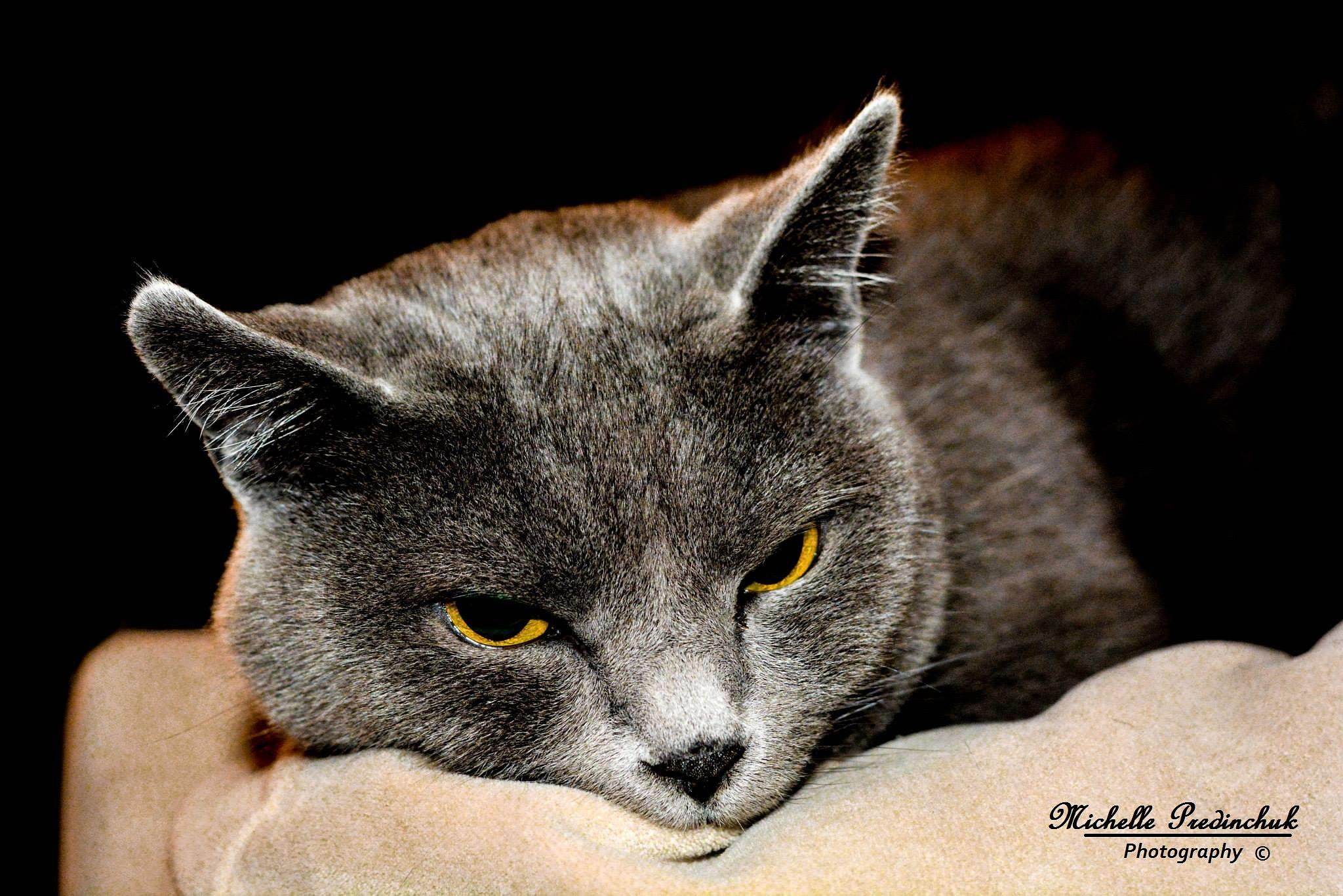 Just a cat by Michelle