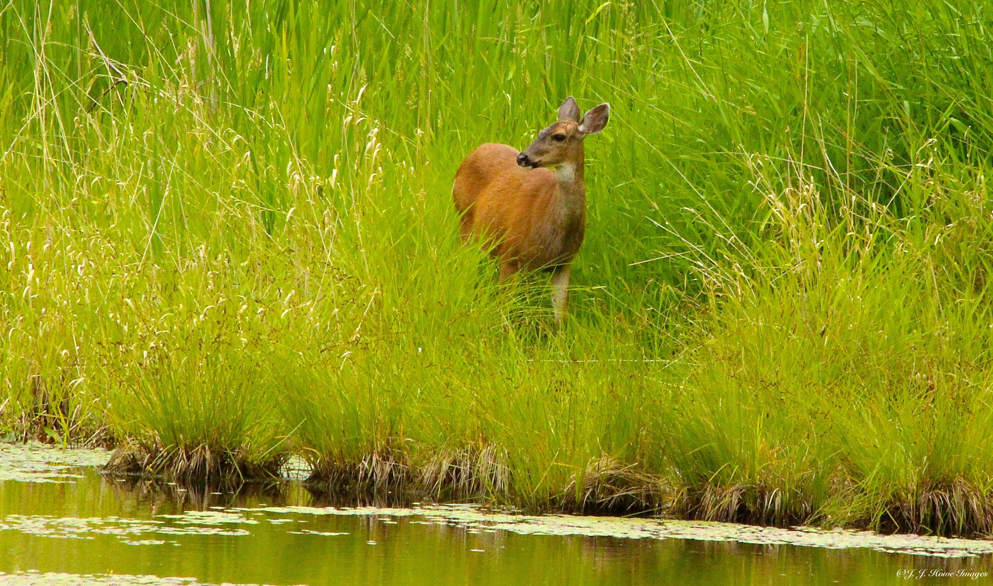 Amongst the Tall Grass  by judy.howe.33