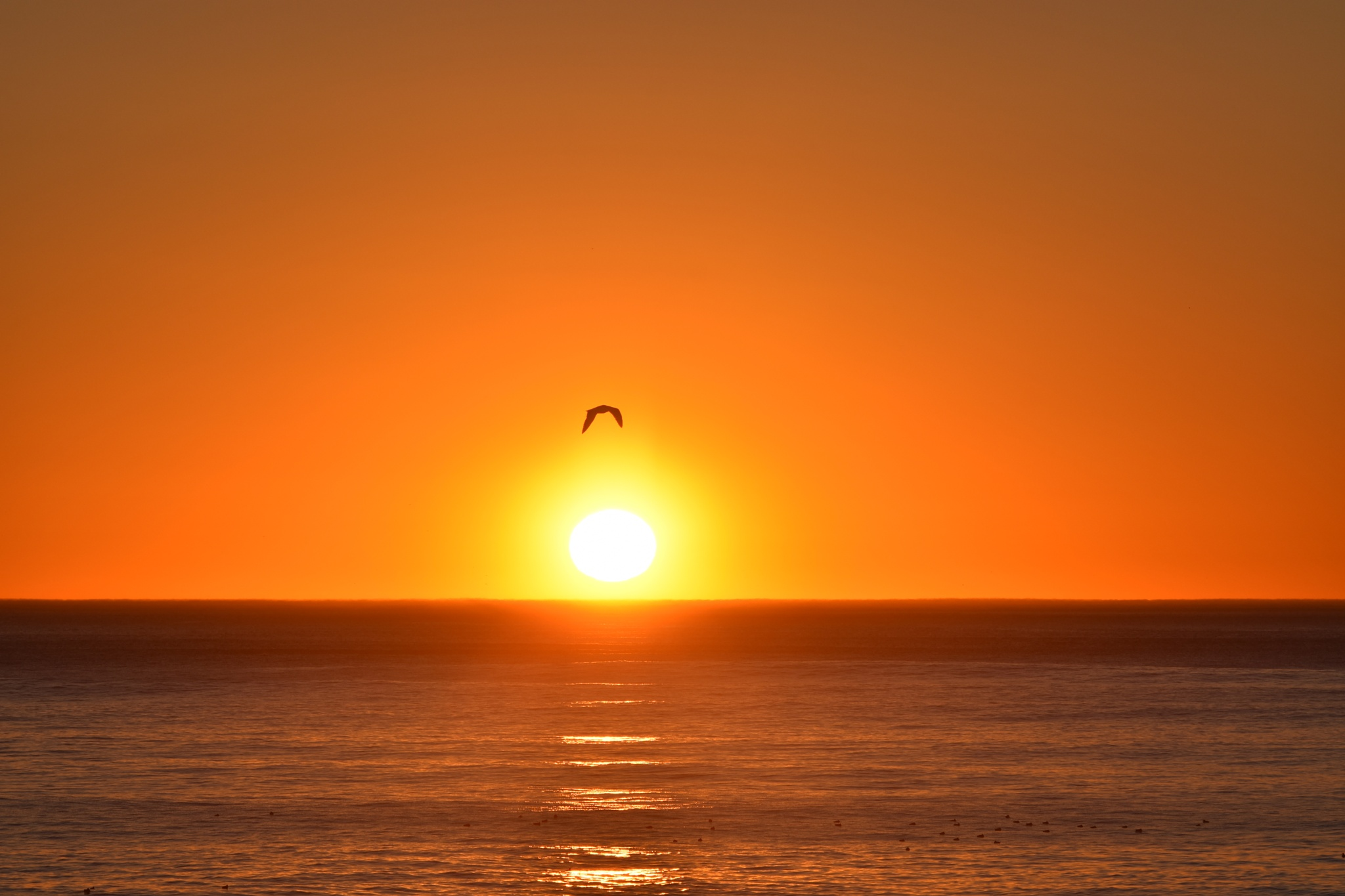 Pacific Sunset by Gerard Francis Corbett