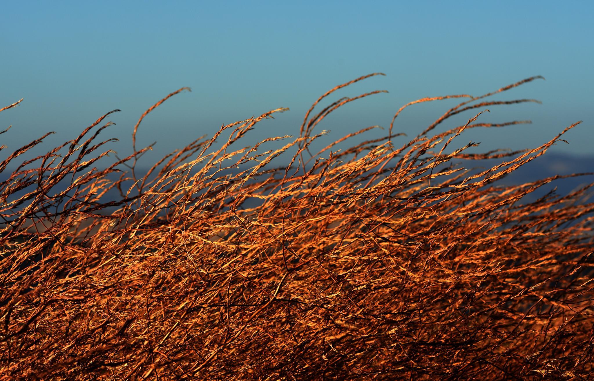 Sunset Reflection by Gerard Francis Corbett
