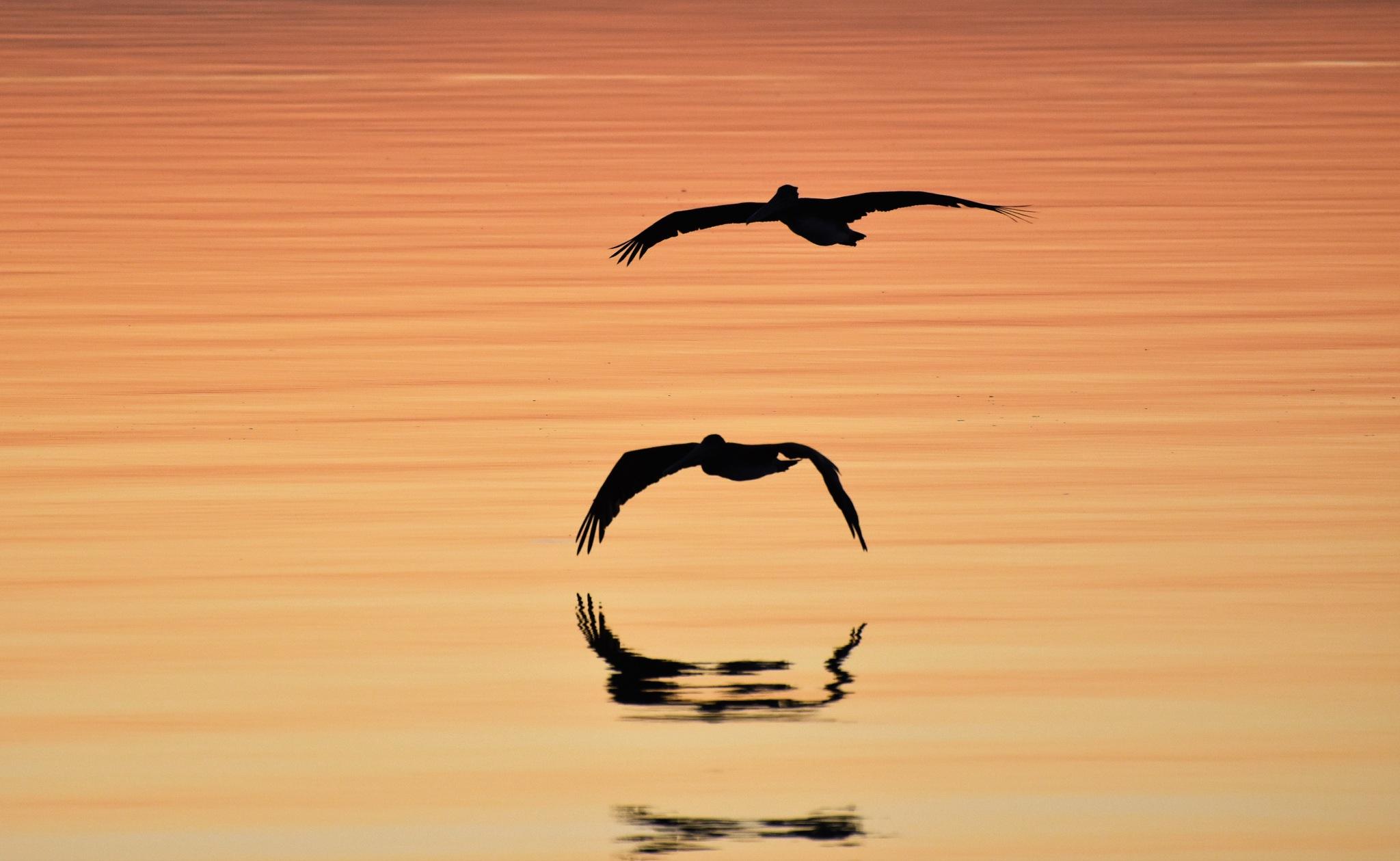 Morning Flight by Gerard Francis Corbett