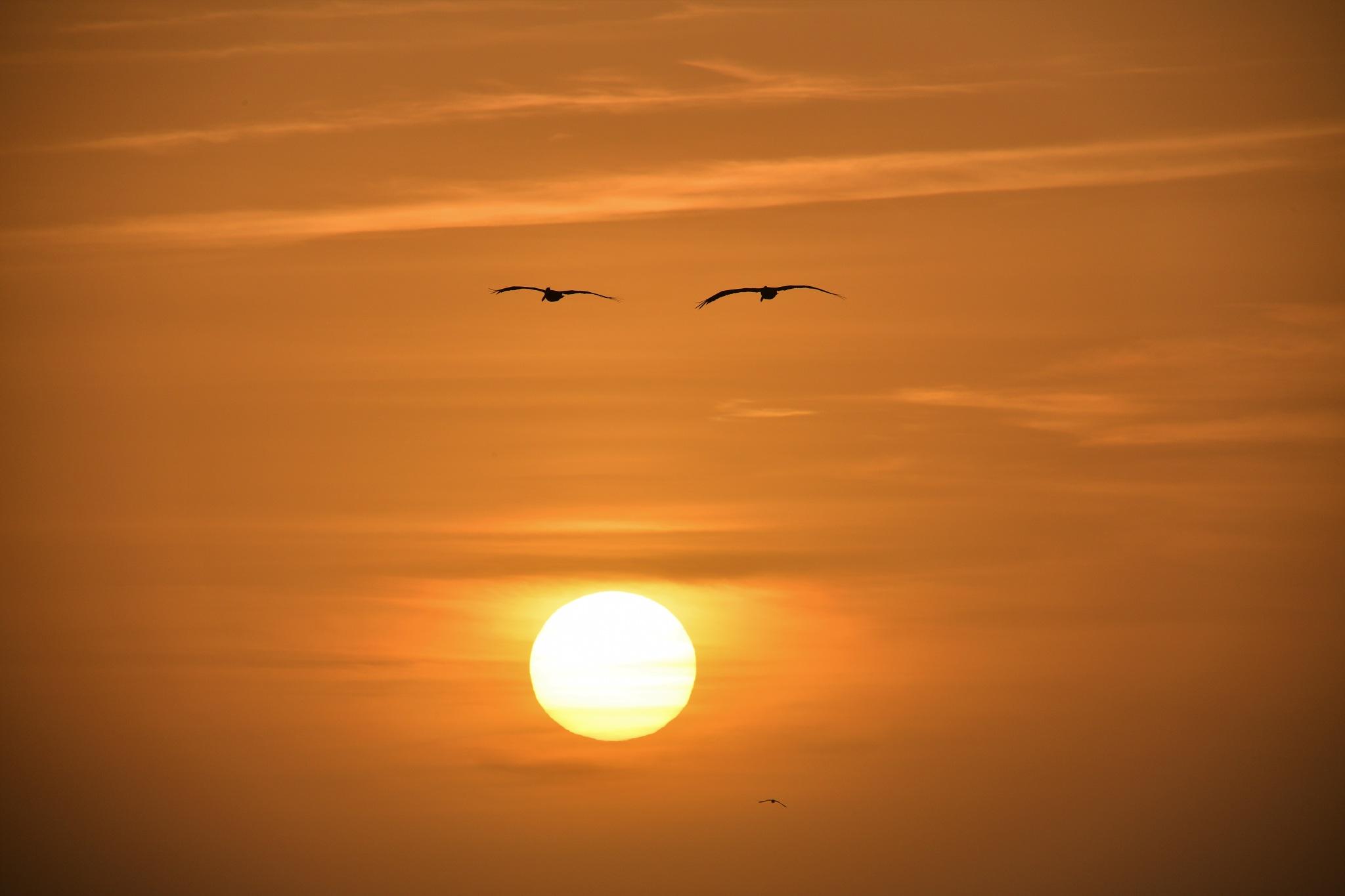 Eyes of Sunset by Gerard Francis Corbett