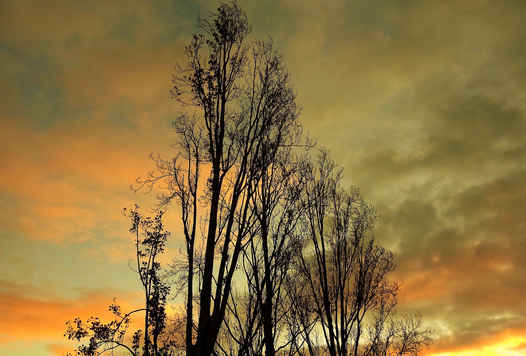 Sundown on Autumn by Gerard Francis Corbett