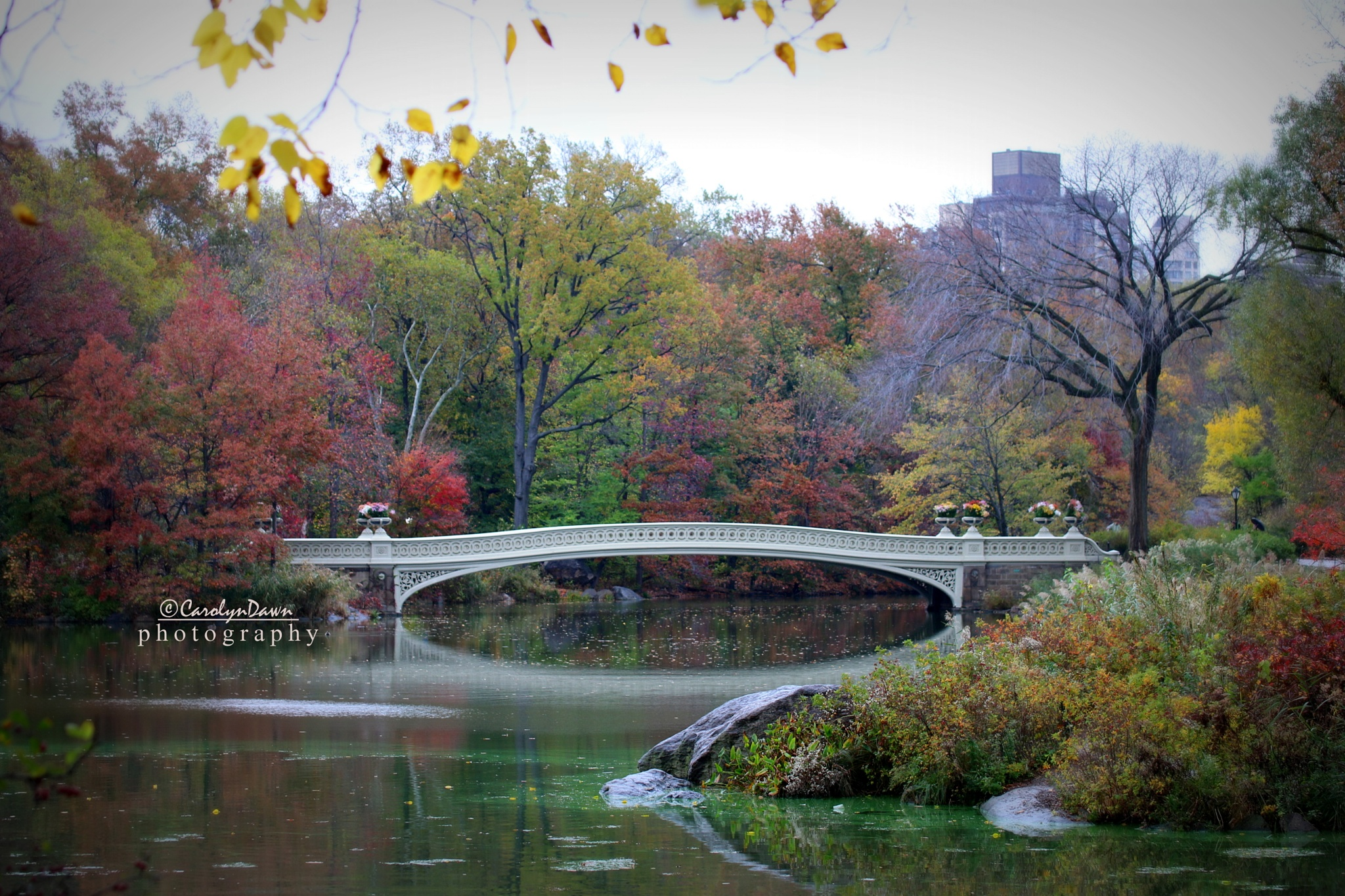 Central Park's Bow Bridge, Manhattan by CarolynDawn11