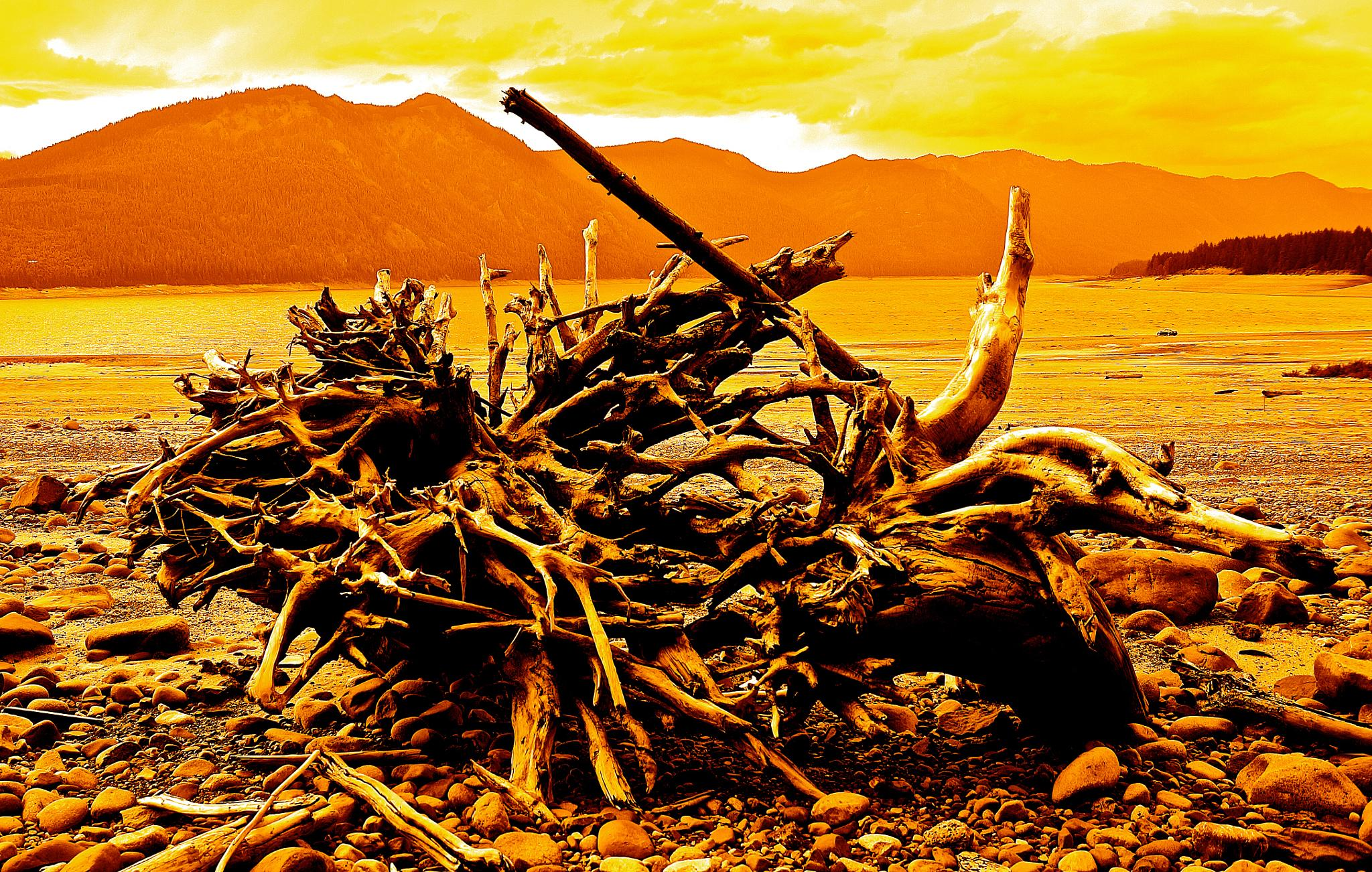 ALIEN ROOTS FIGHT ON PLANET MARS by orhidea images