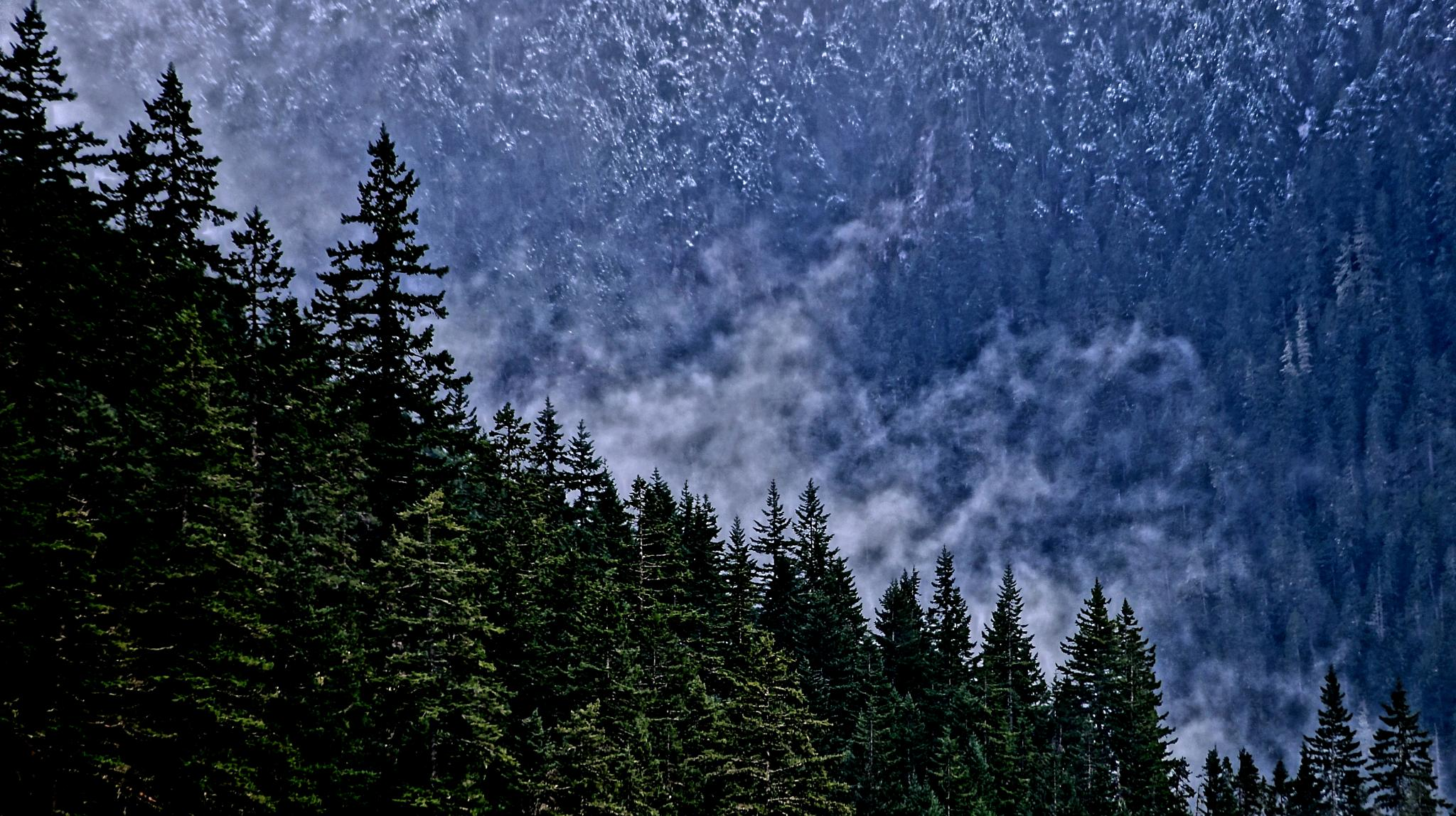 NORTH CASCADES,WA by orhidea images