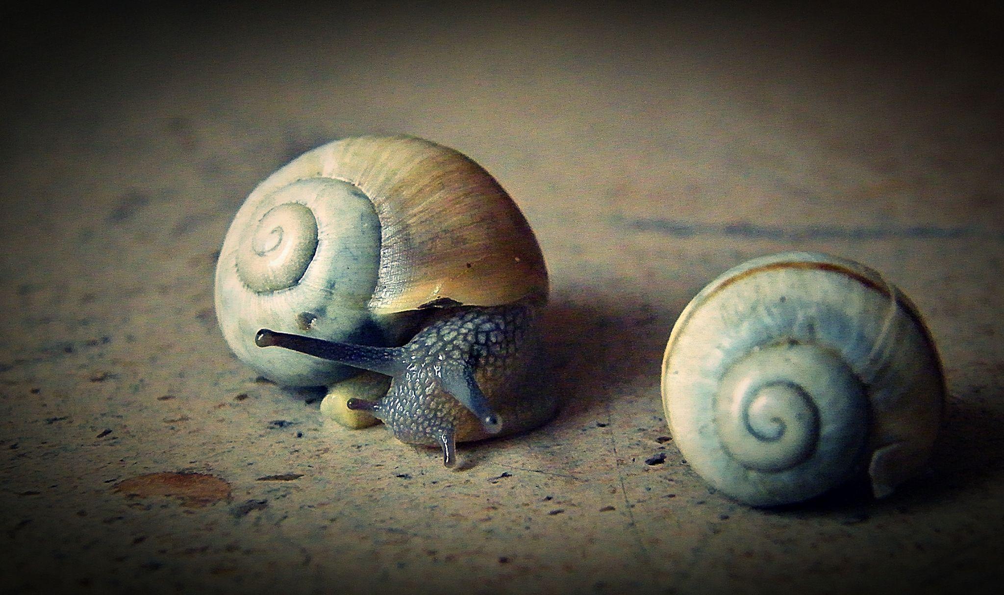 snail by MCAdel