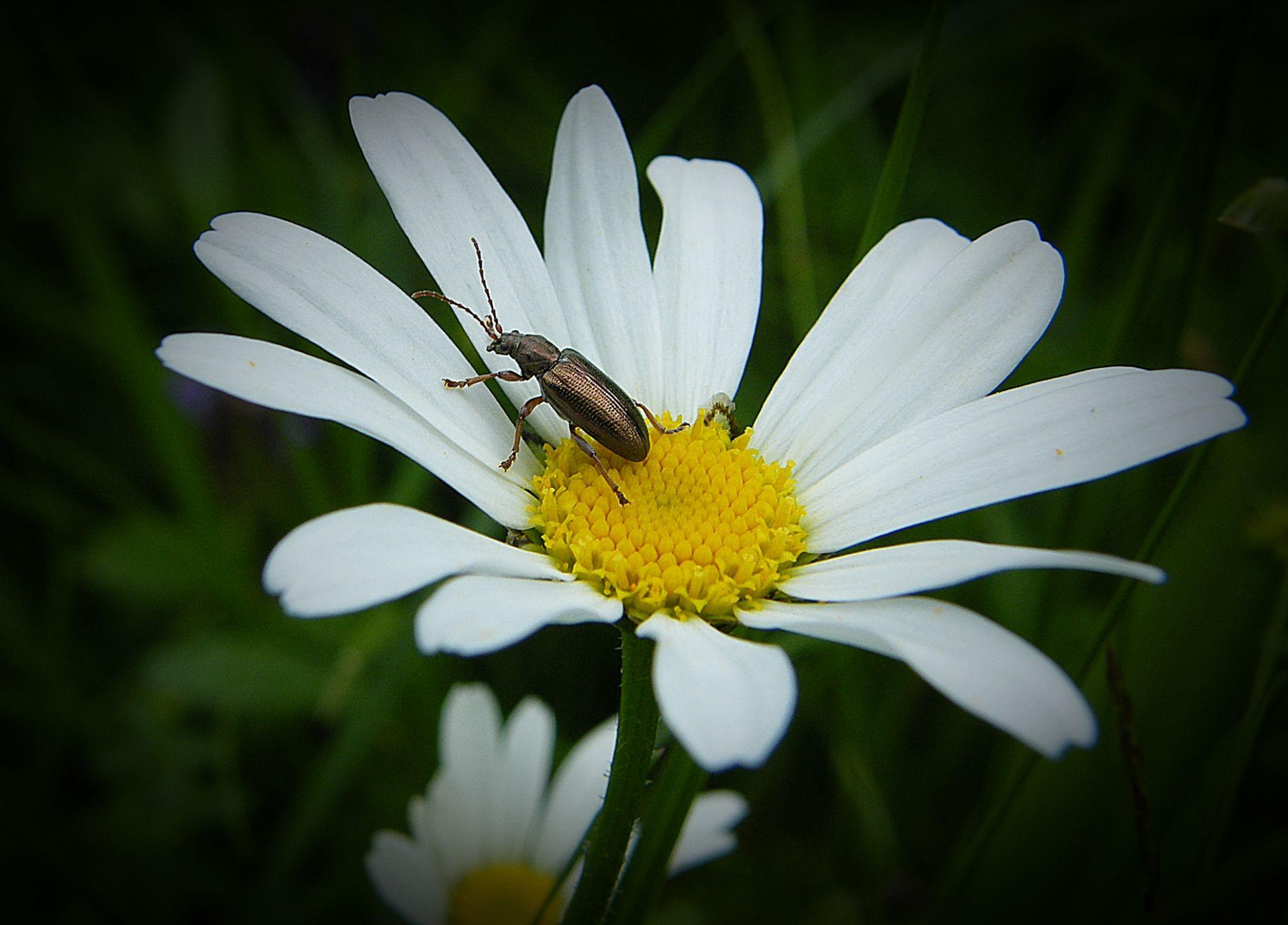bug by MCAdel
