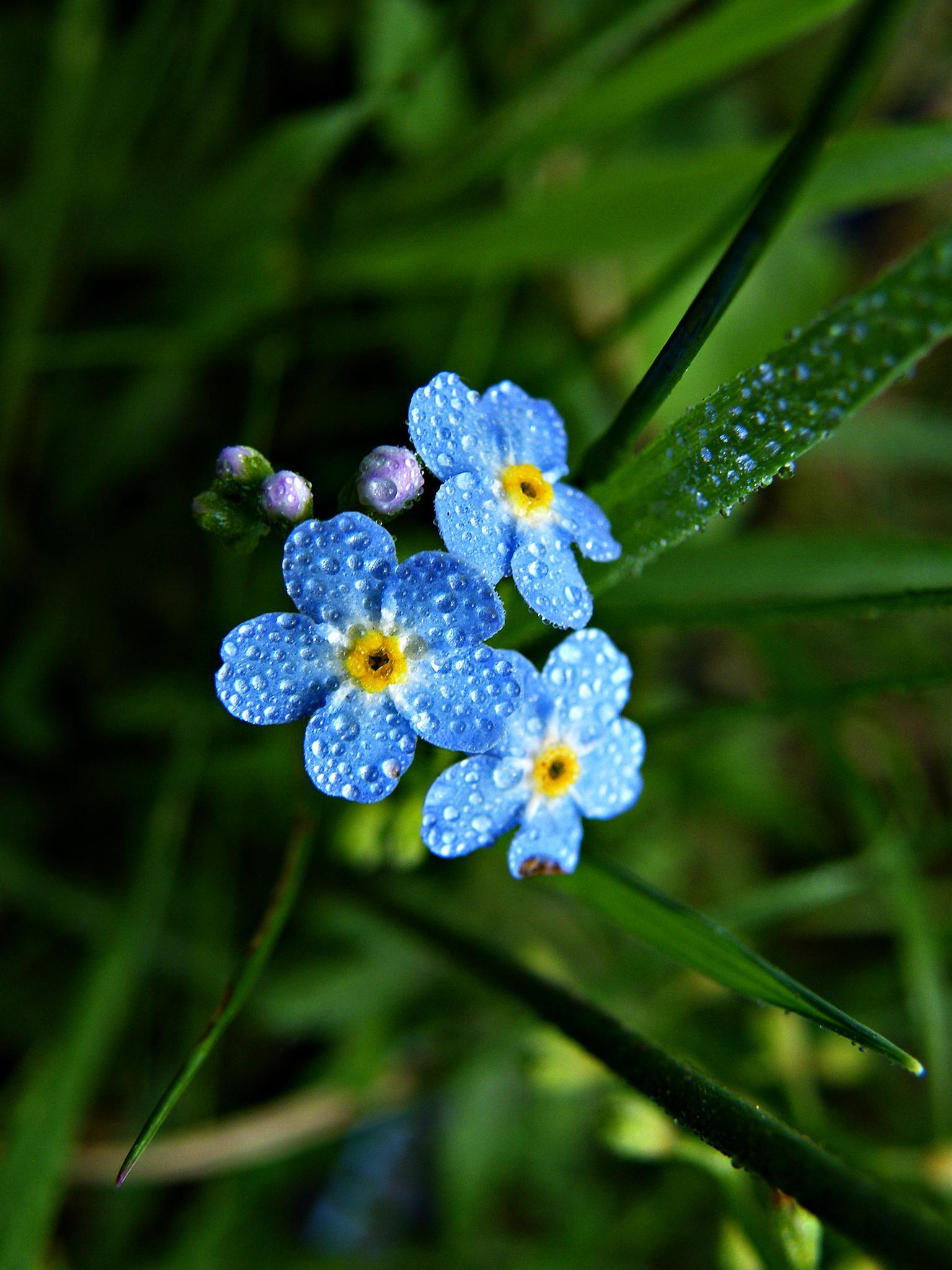 blue by MCAdel