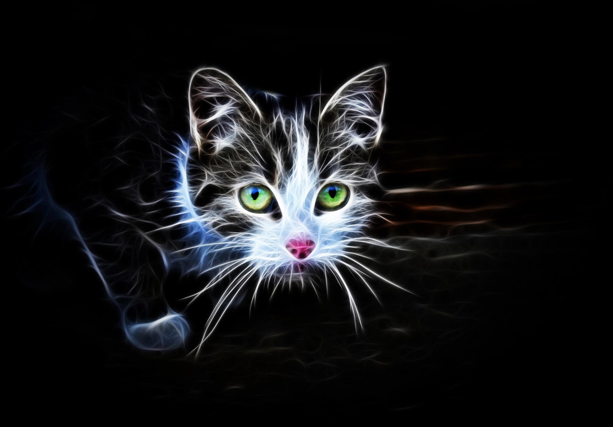 cat by MCAdel