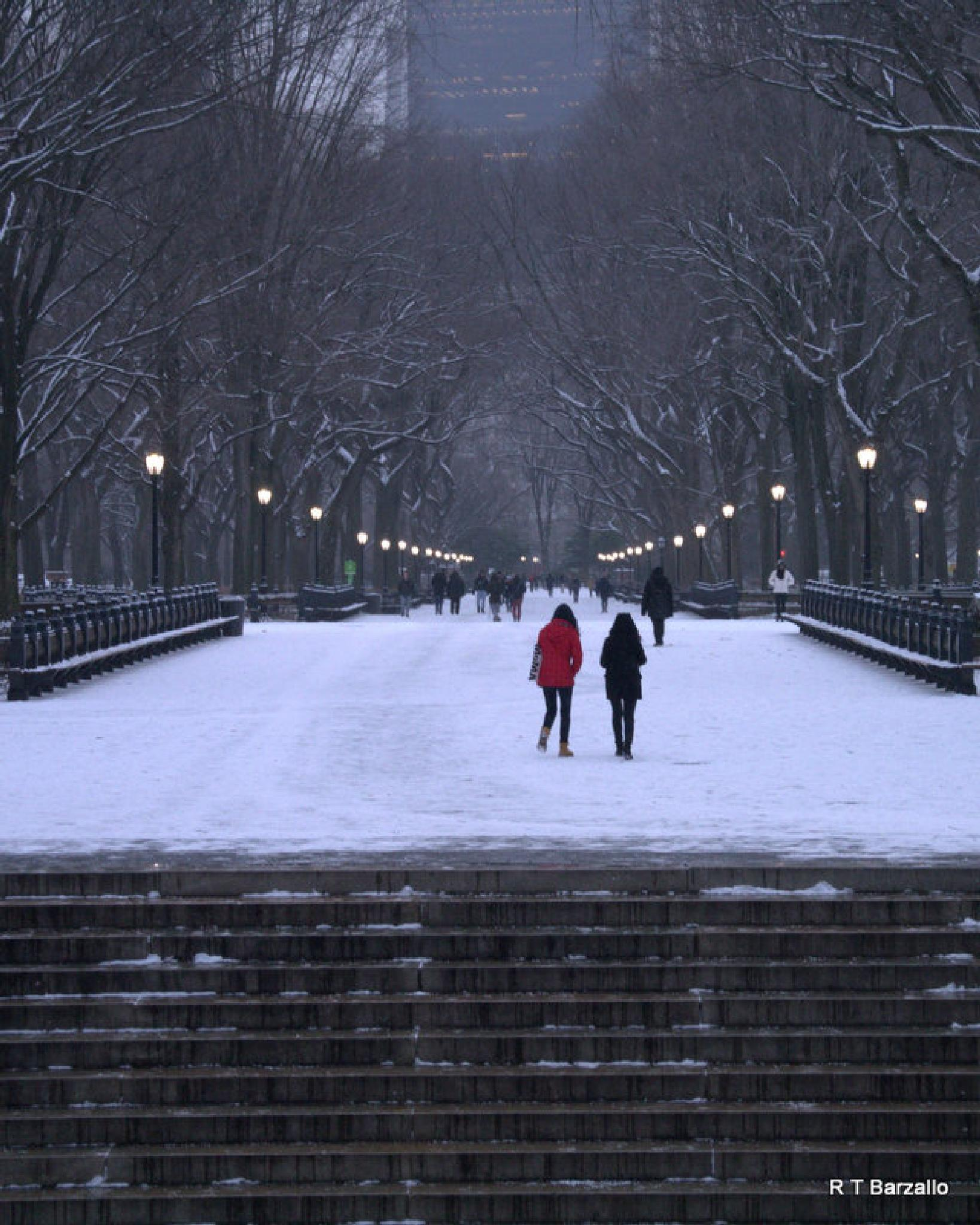 Central Park NYC by Robert_Barzallo