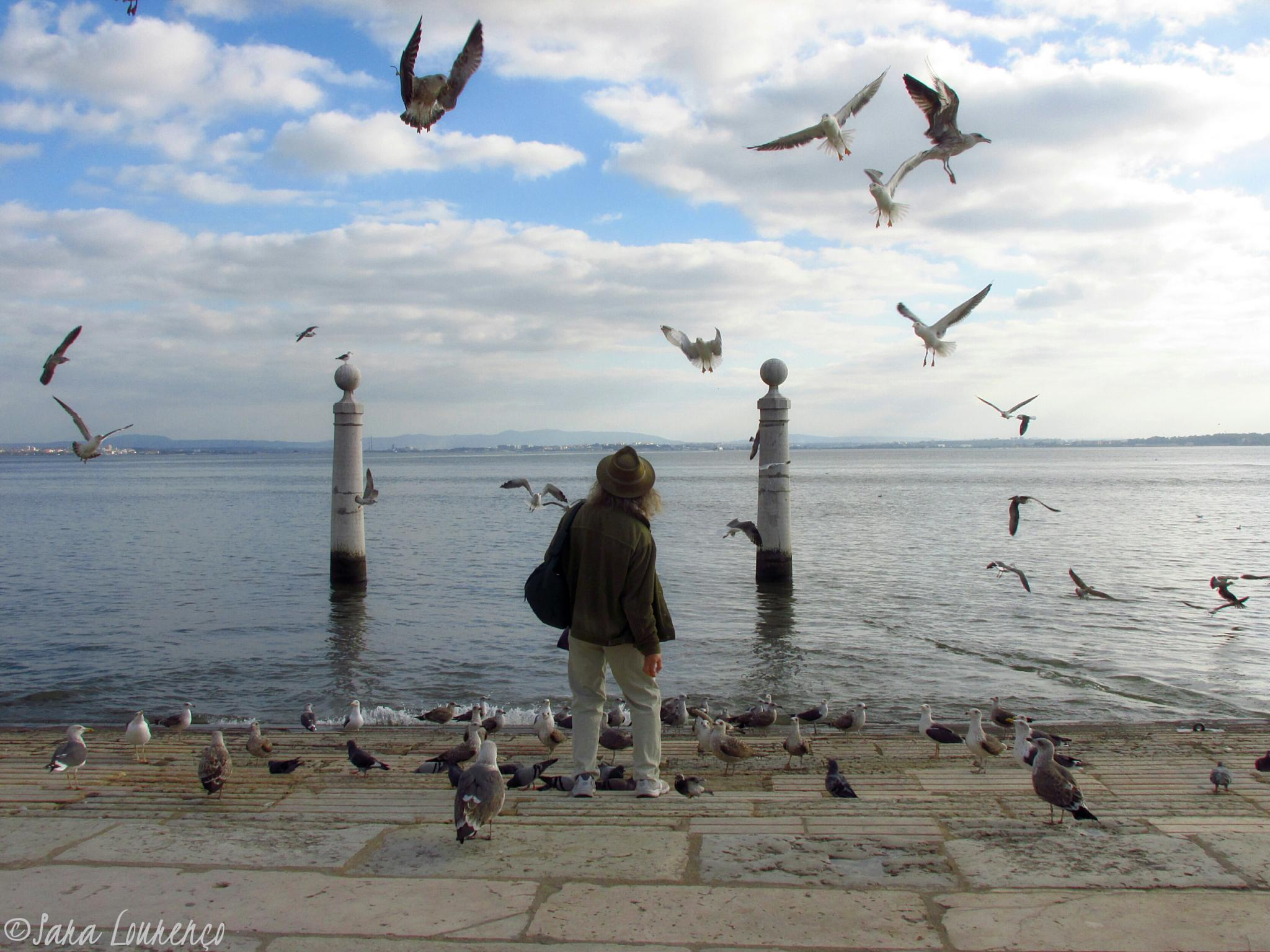 Master of the Seagulls  by Sara Lourenço Photography