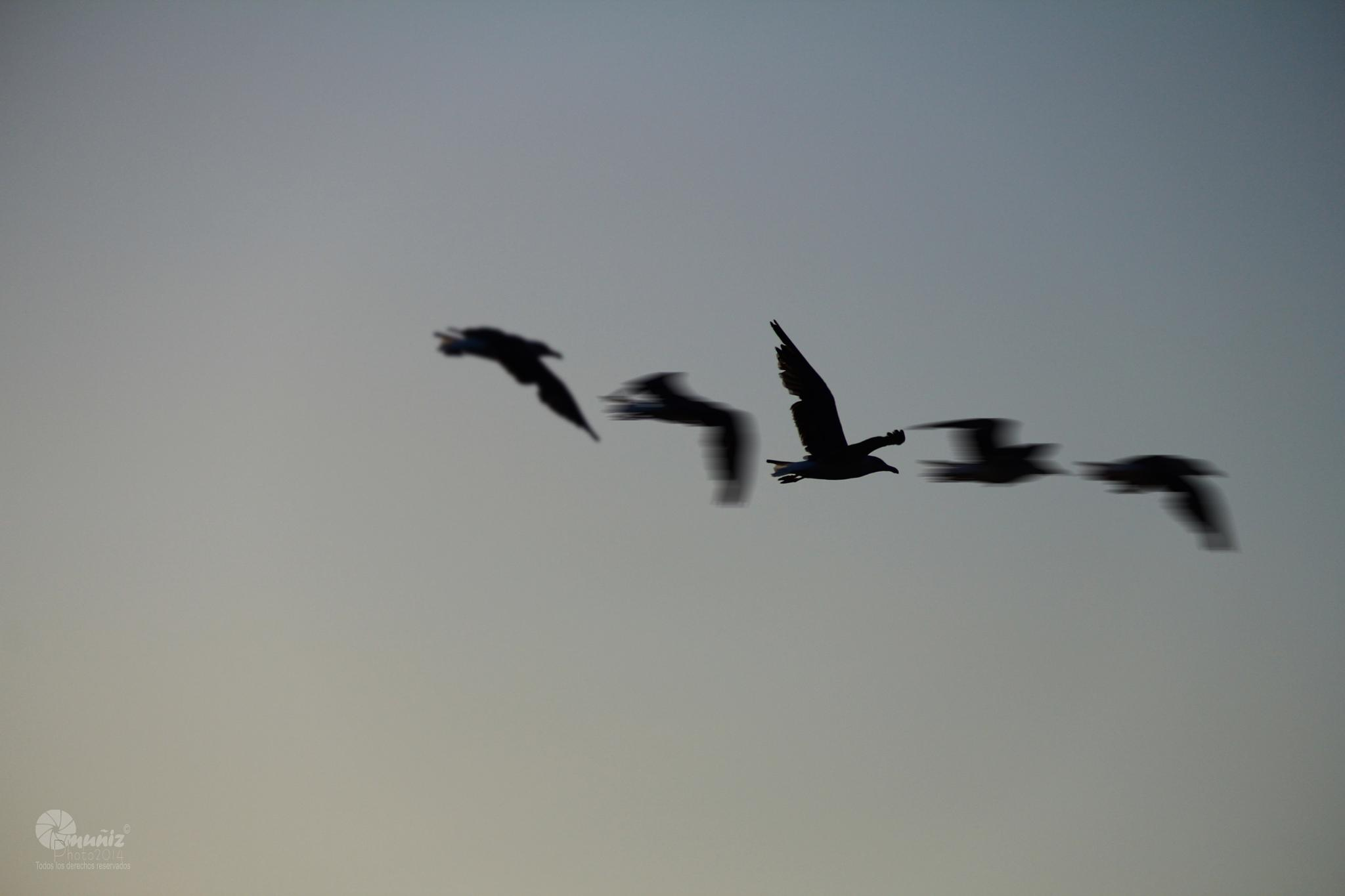 Fly by Champollion Photo