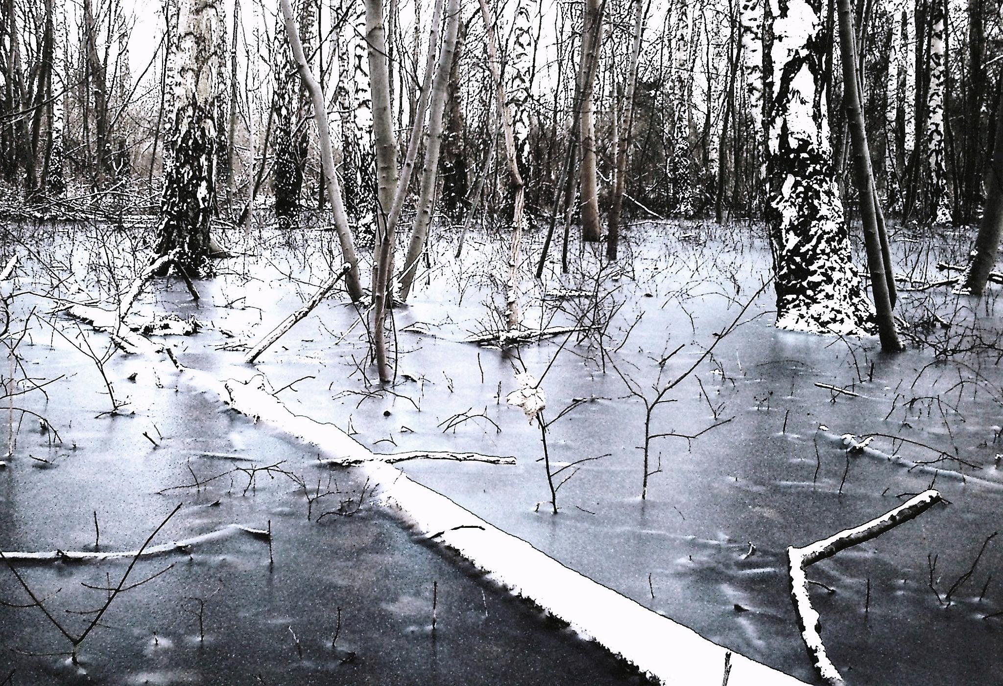 The flooded forest froze to ice tonight 2. by MiaE