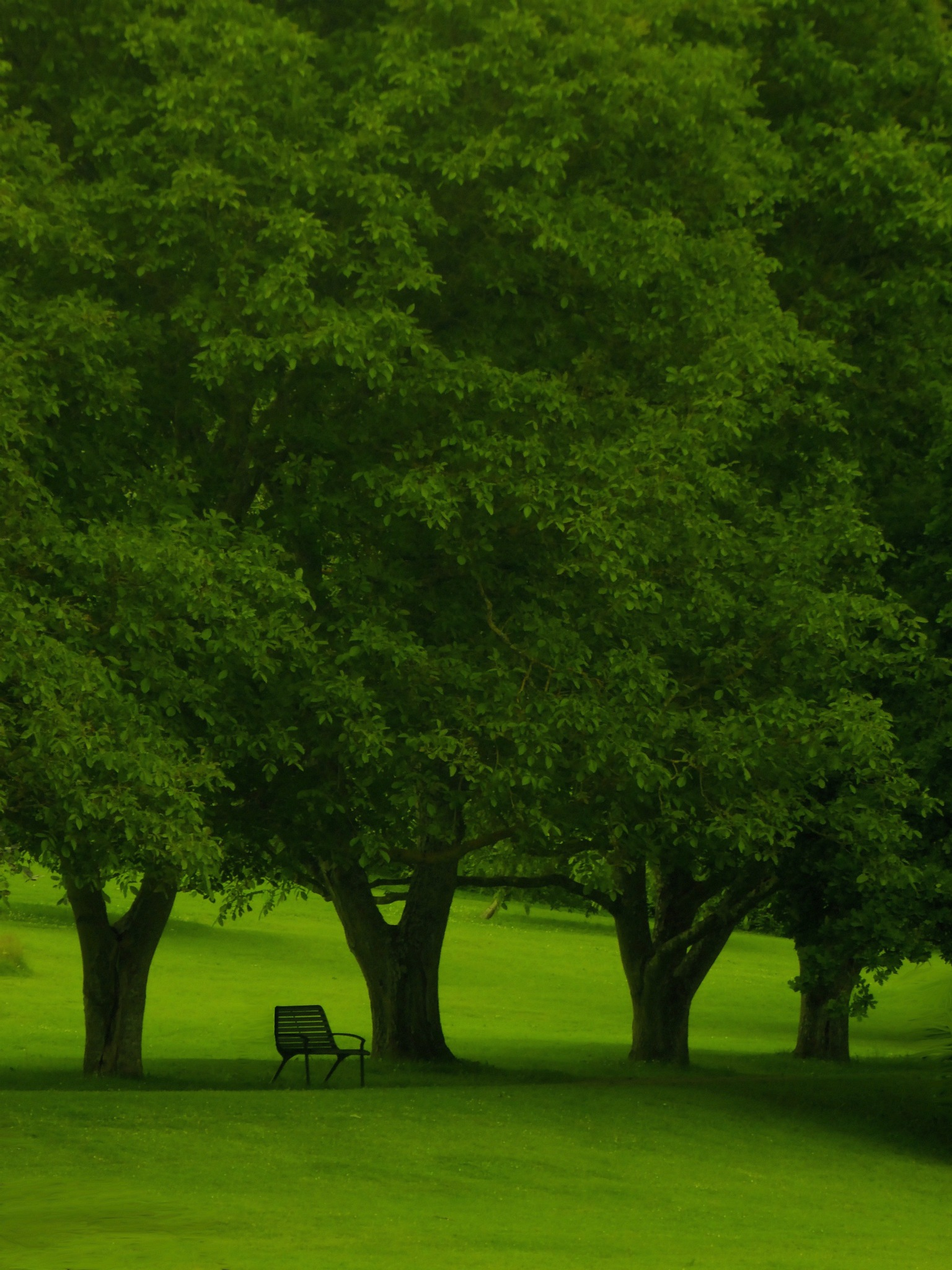 Surrounded by green by MiaE
