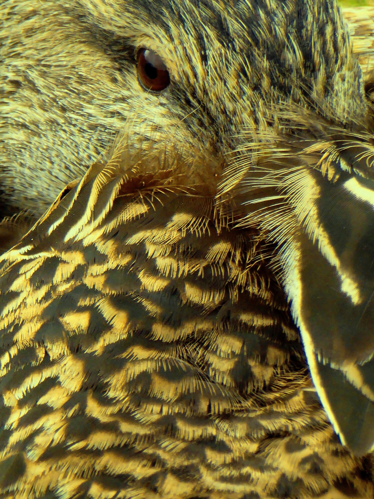 Up close with a duck by MiaE