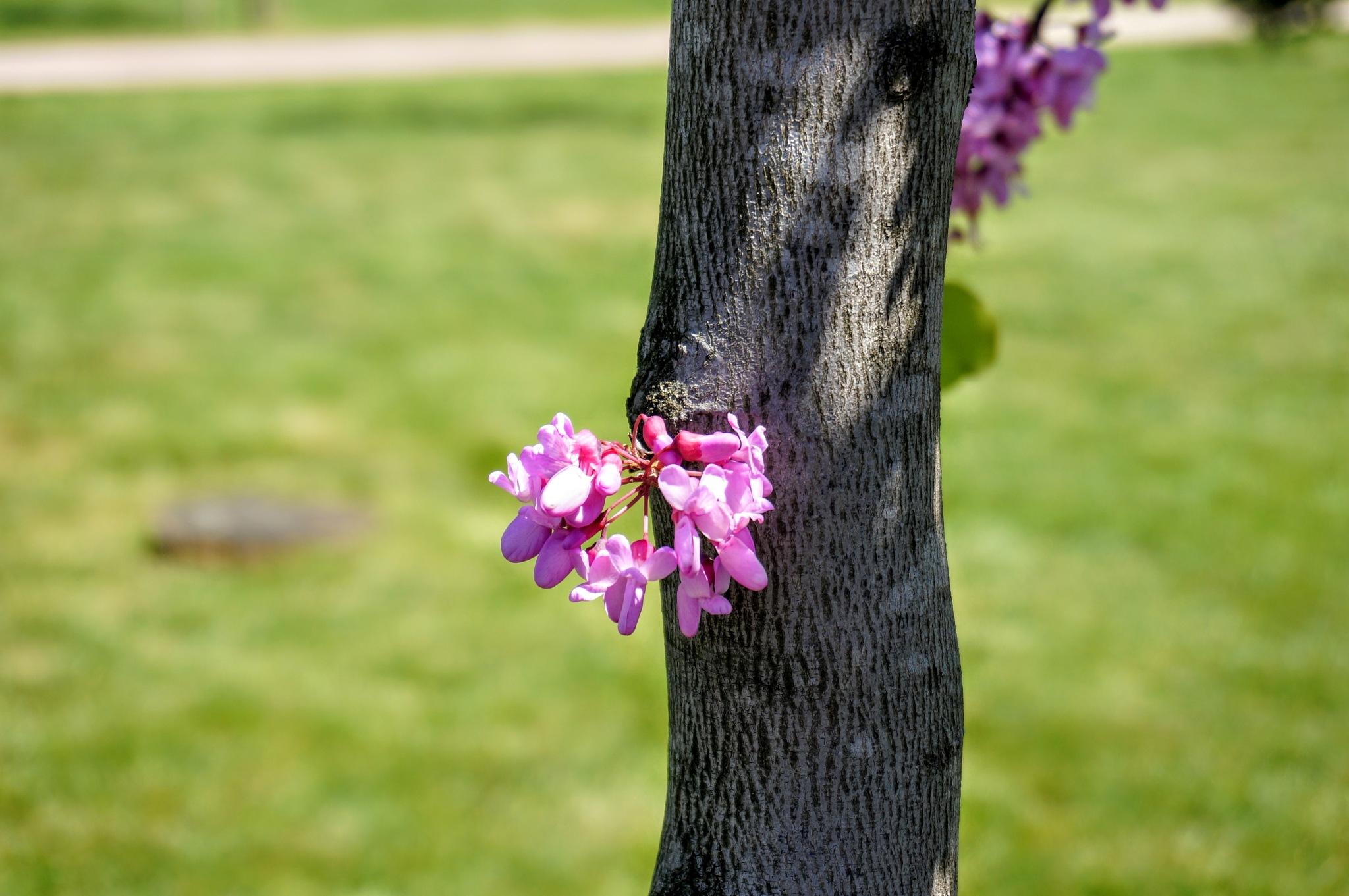 heartfelt spring by Yavuz Sevgi