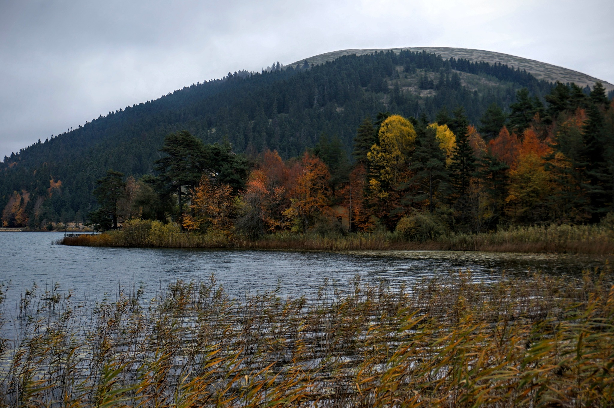 Autumn colors... by Yavuz Sevgi