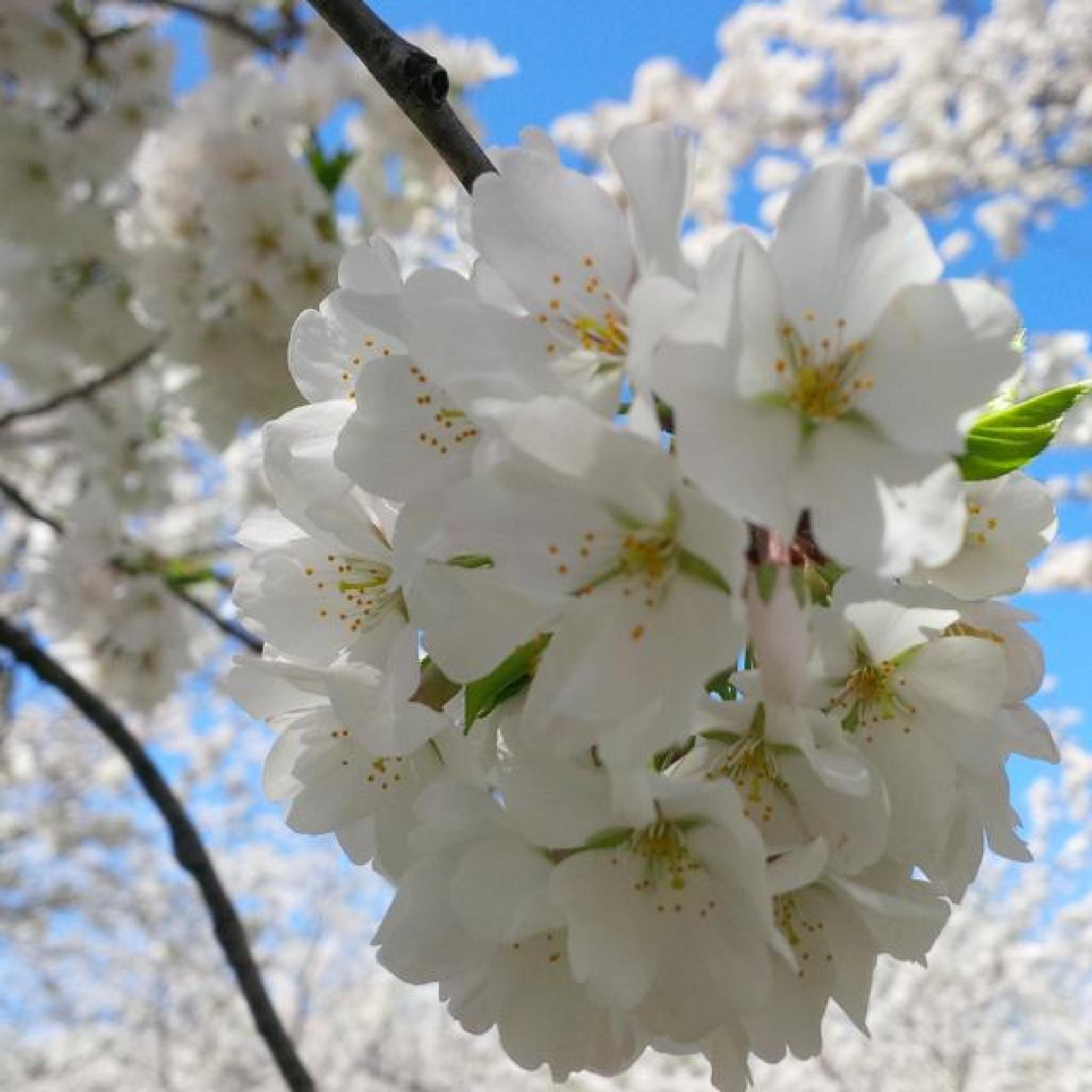 Blossoms Upclose by Gene Ellison