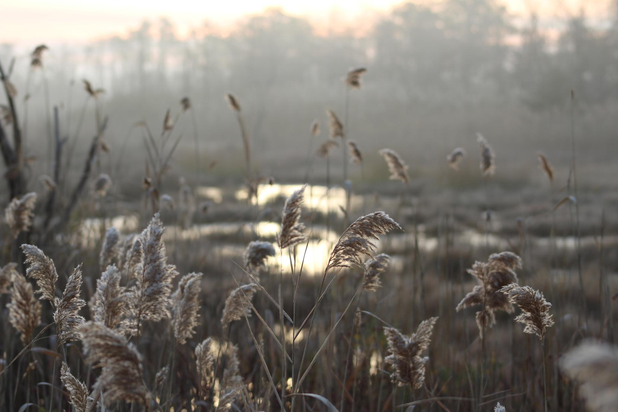 Frosty Fog by Lynn A Hansen