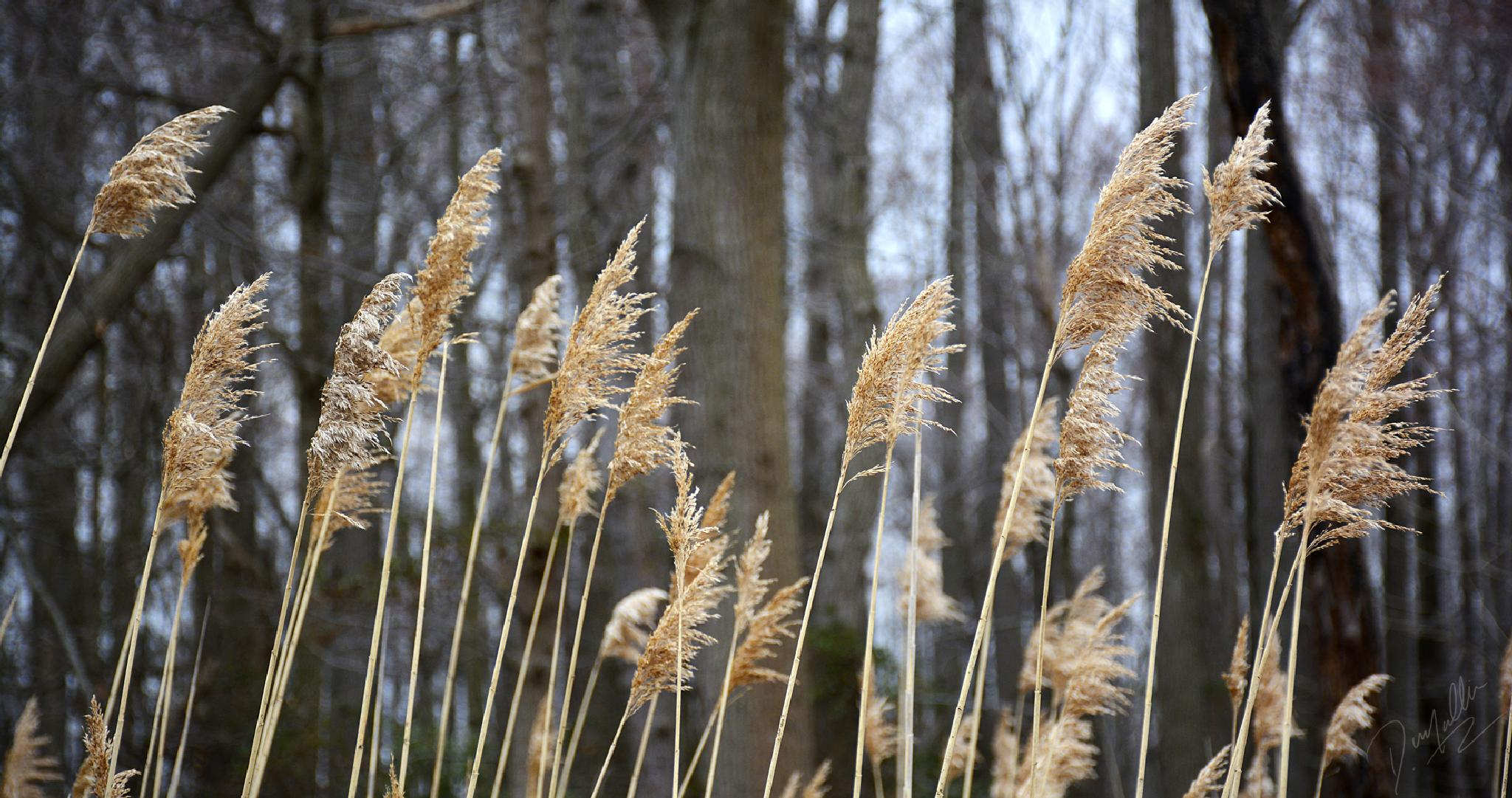 Indian Grass 2 by Dennis Mullin