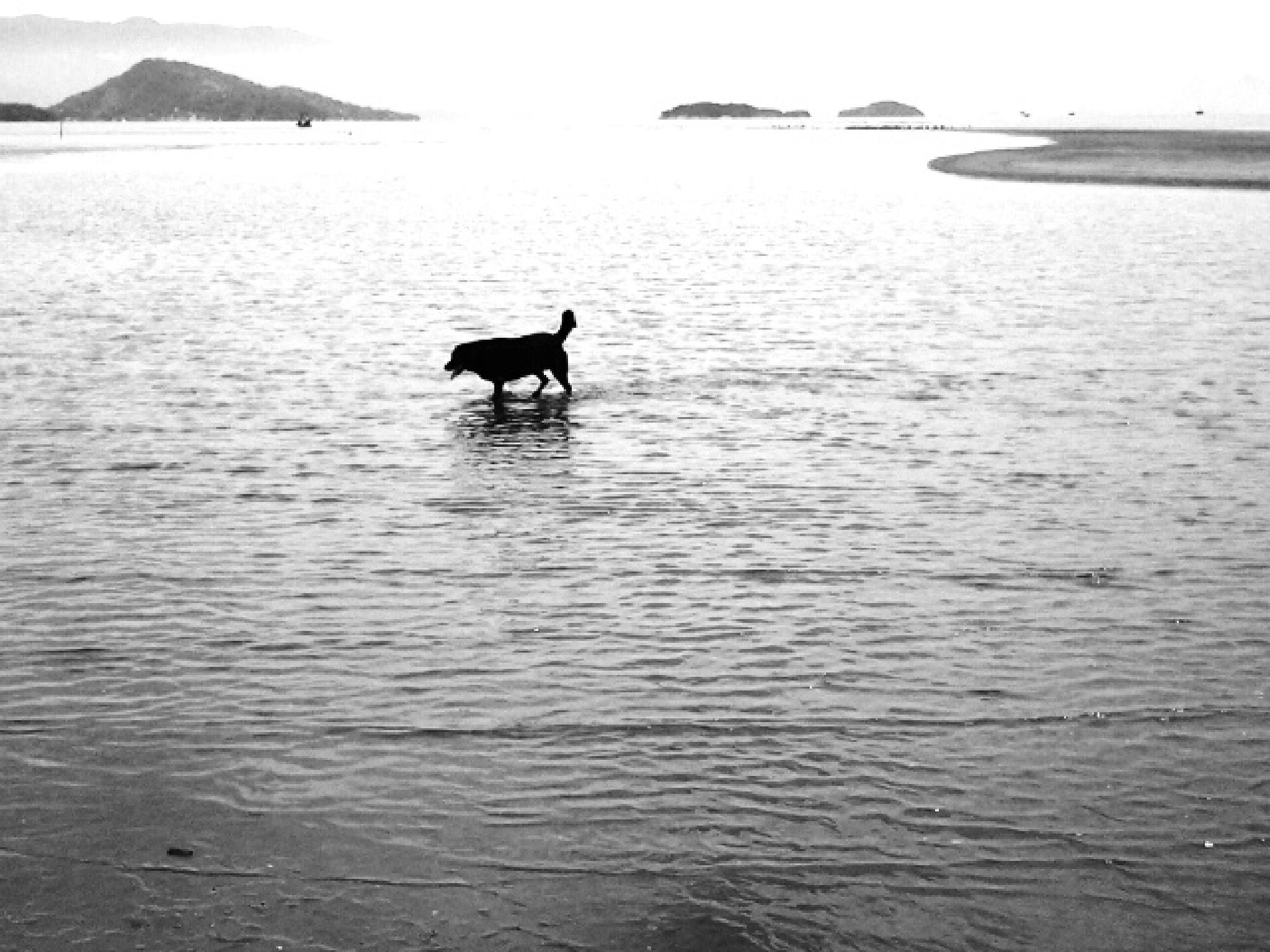 Untitled by Ana Carvalho