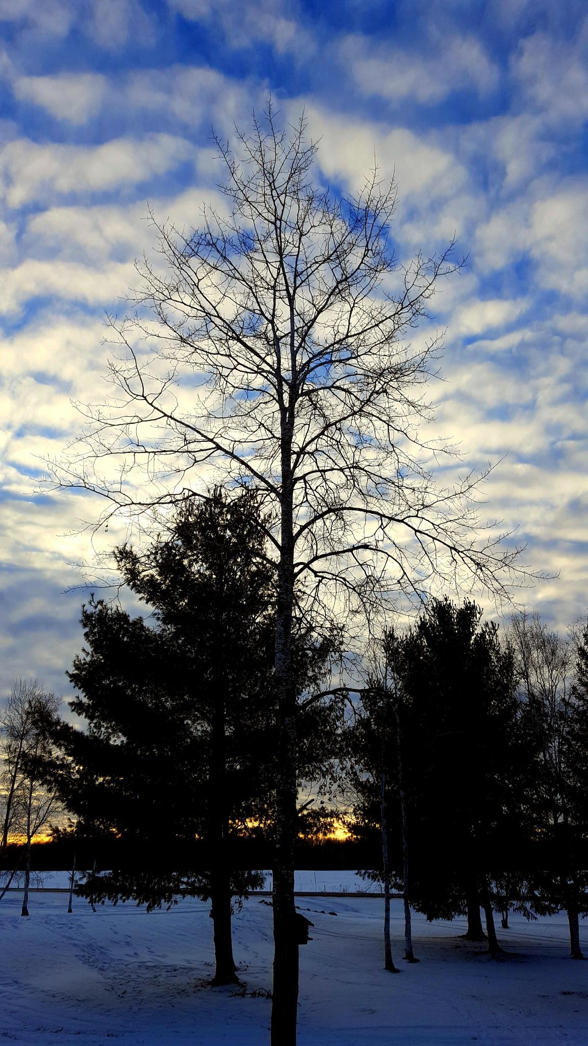Search For Solitude  by Carolyn Stineman