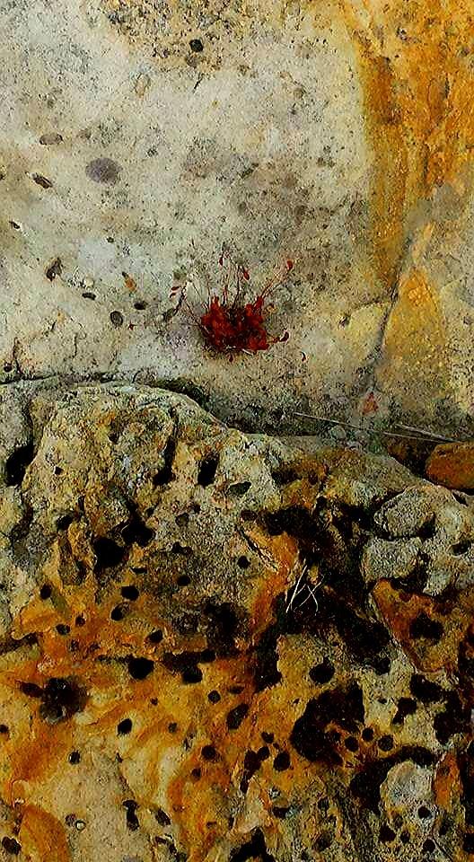 Even Stone Brings Forth Life by Carolyn Stineman