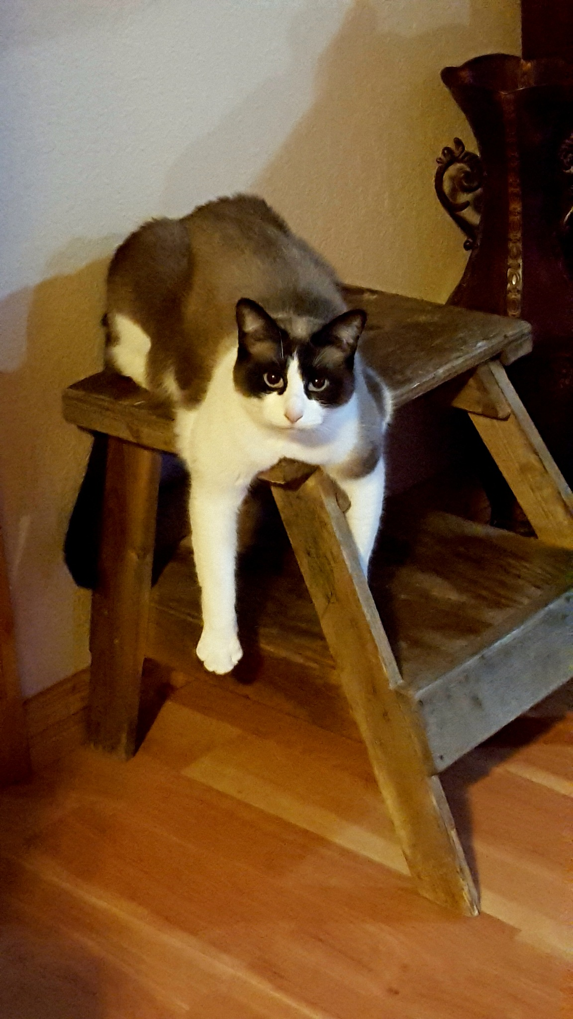 The Cat On The Stool  by Carolyn Stineman