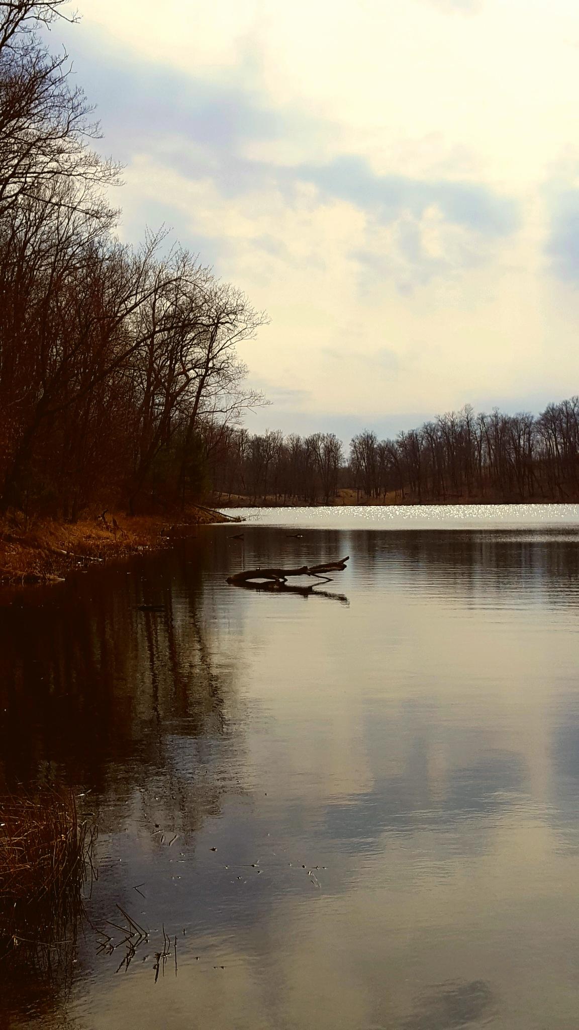 Open Water  by Carolyn Stineman