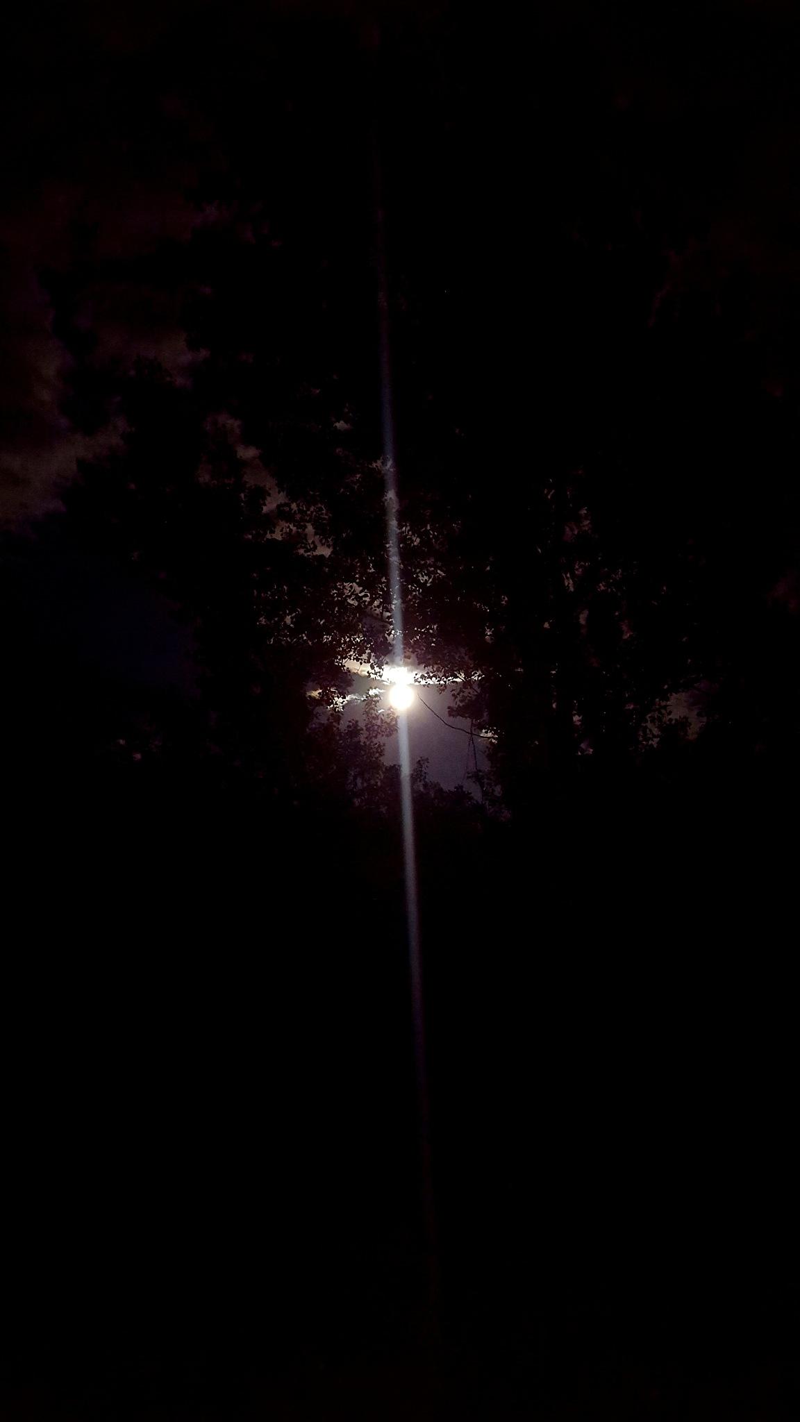 The Shining  by Carolyn Stineman
