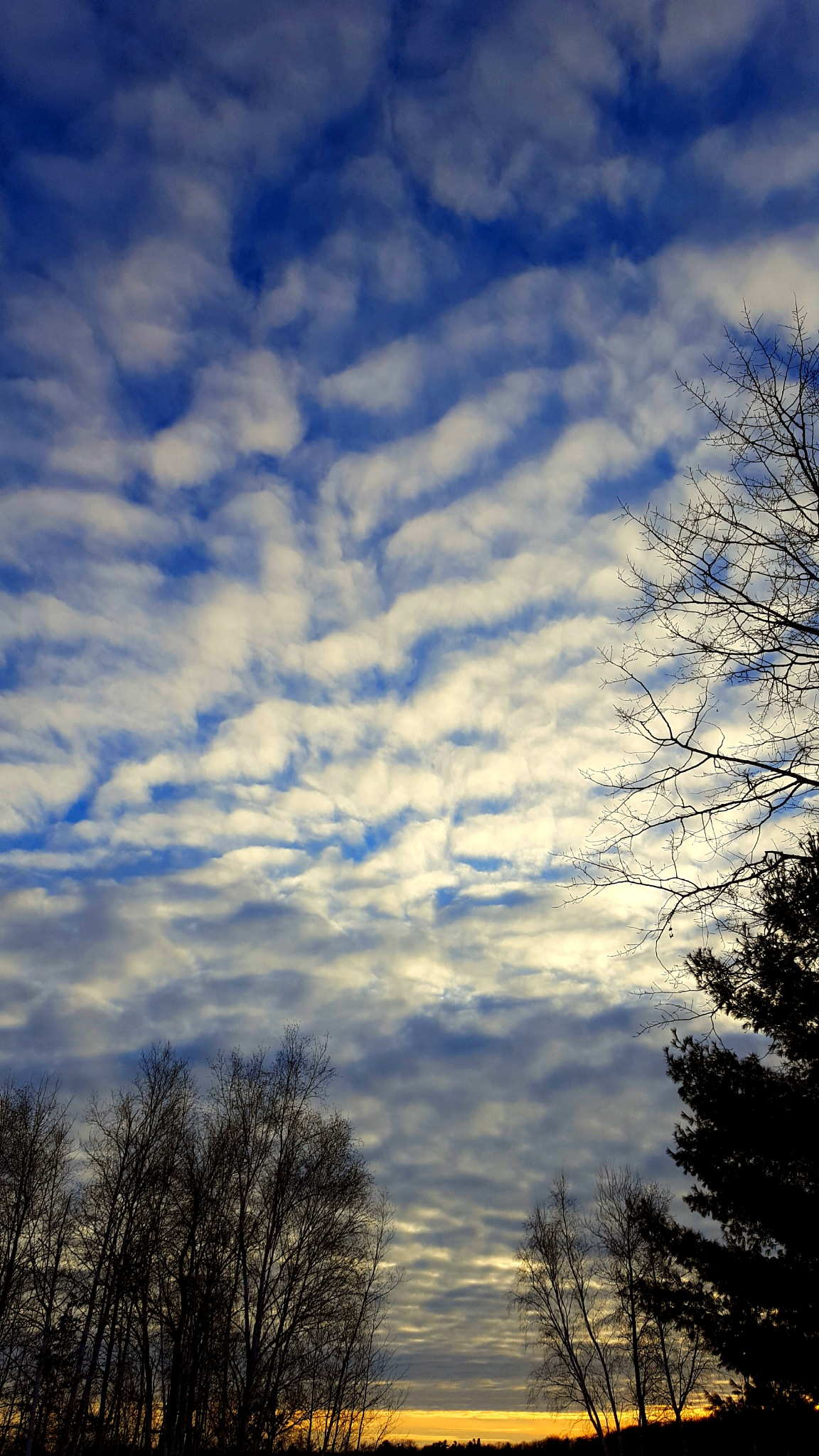 Let Us Possess One World  by Carolyn Stineman