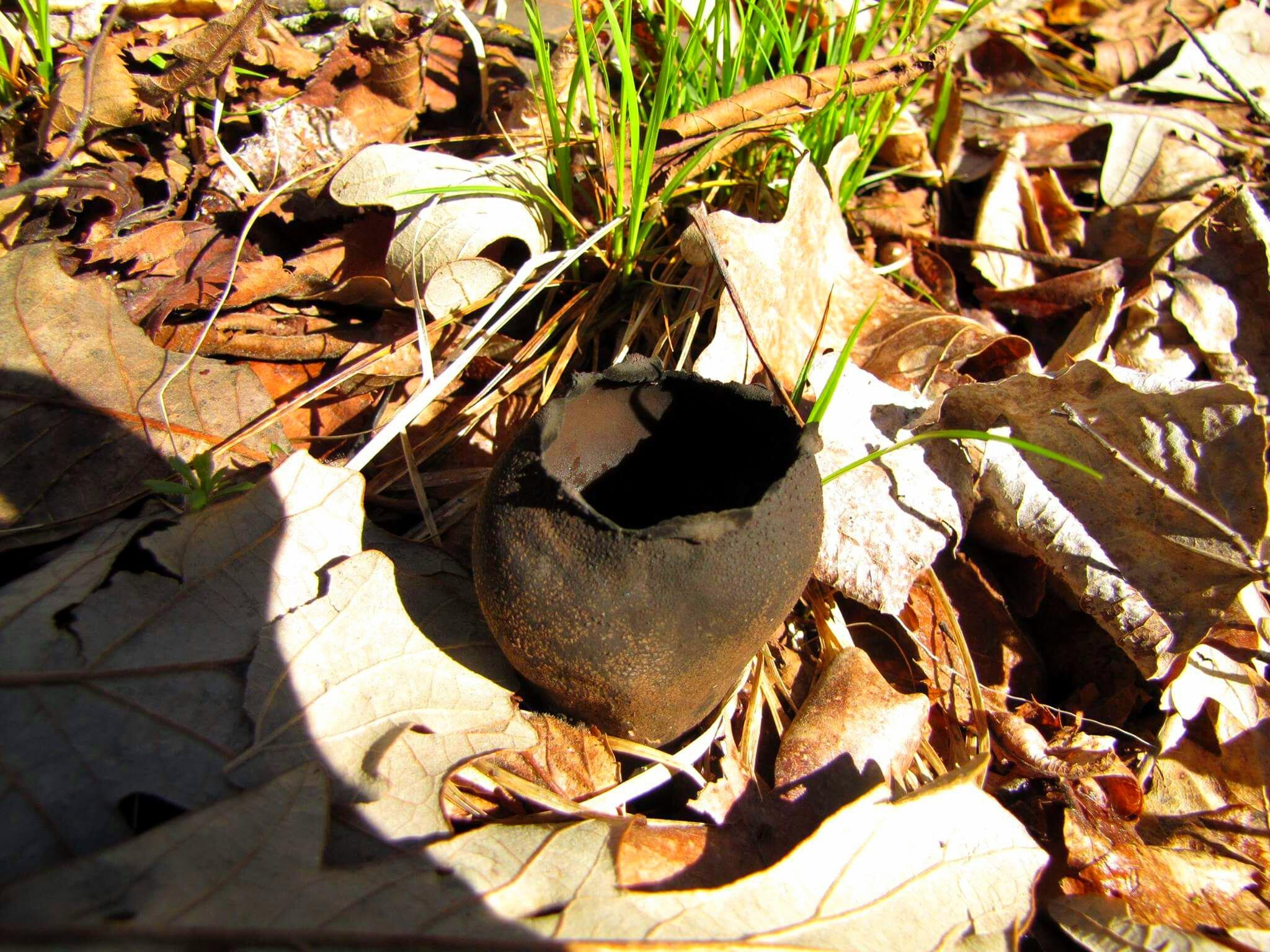 Devil's Urn  by Carolyn Stineman