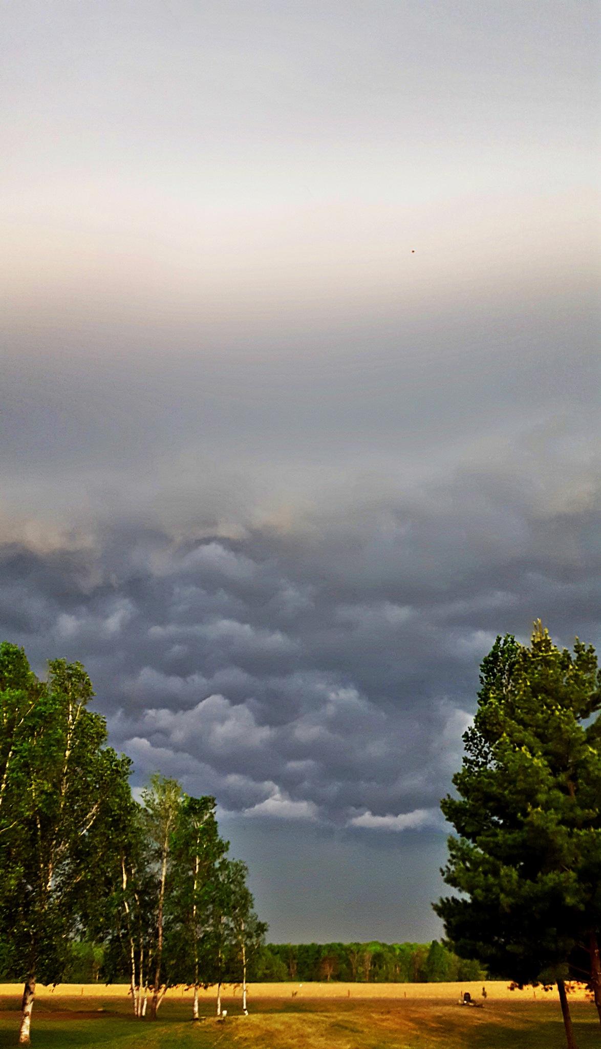 Storm Brewing  by Carolyn Stineman