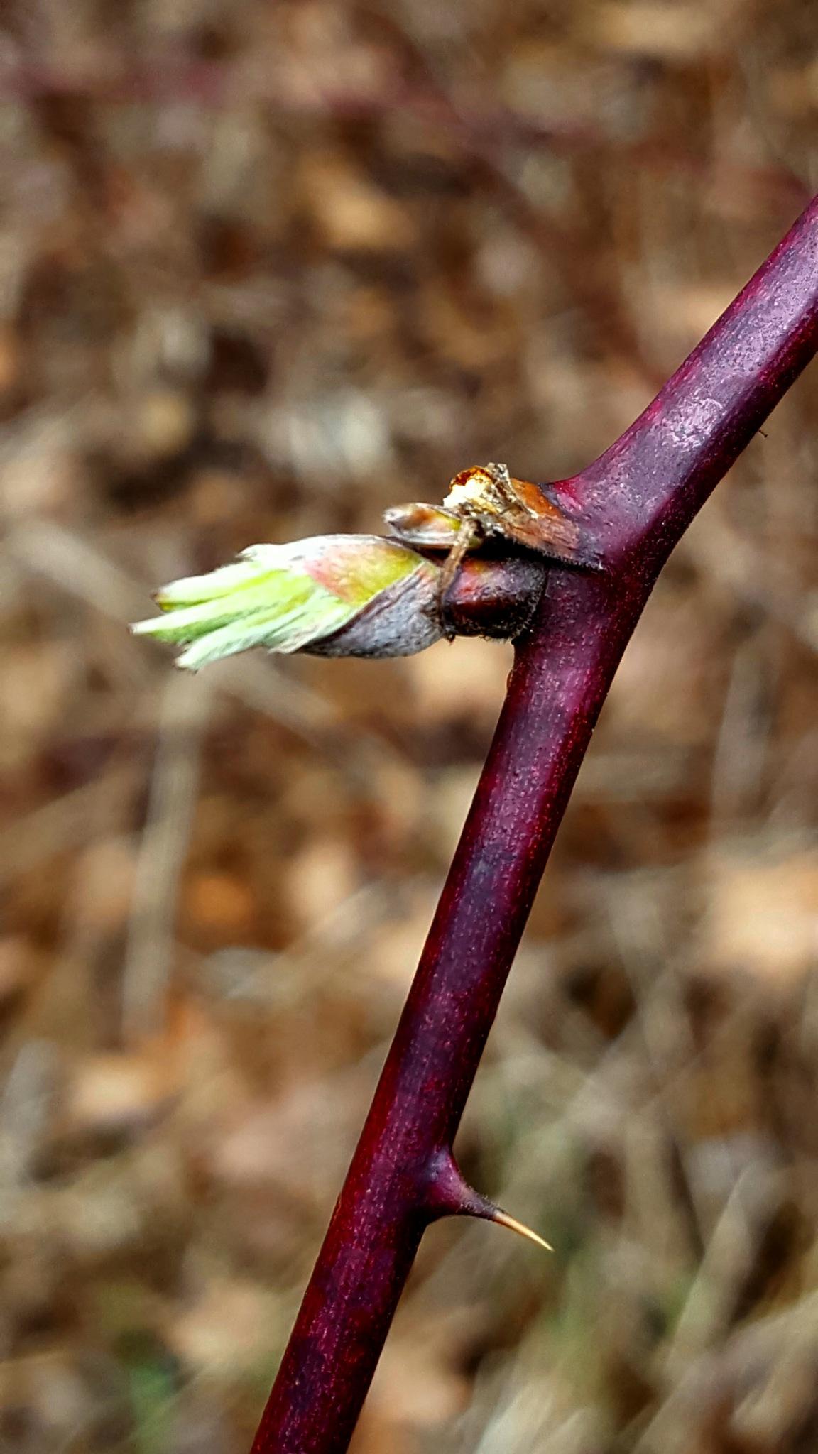 New Blooms Awakening  by Carolyn Stineman
