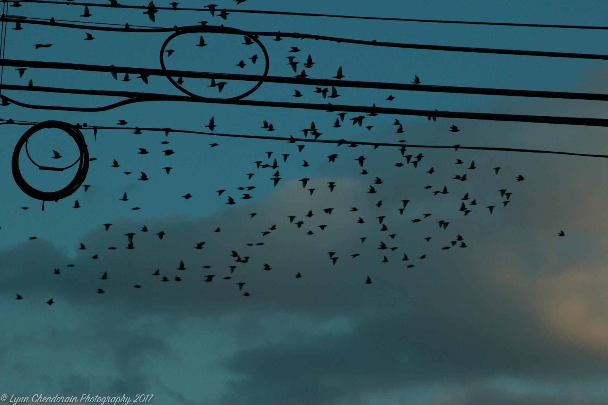 Birds Eye by Lynn Chendorain