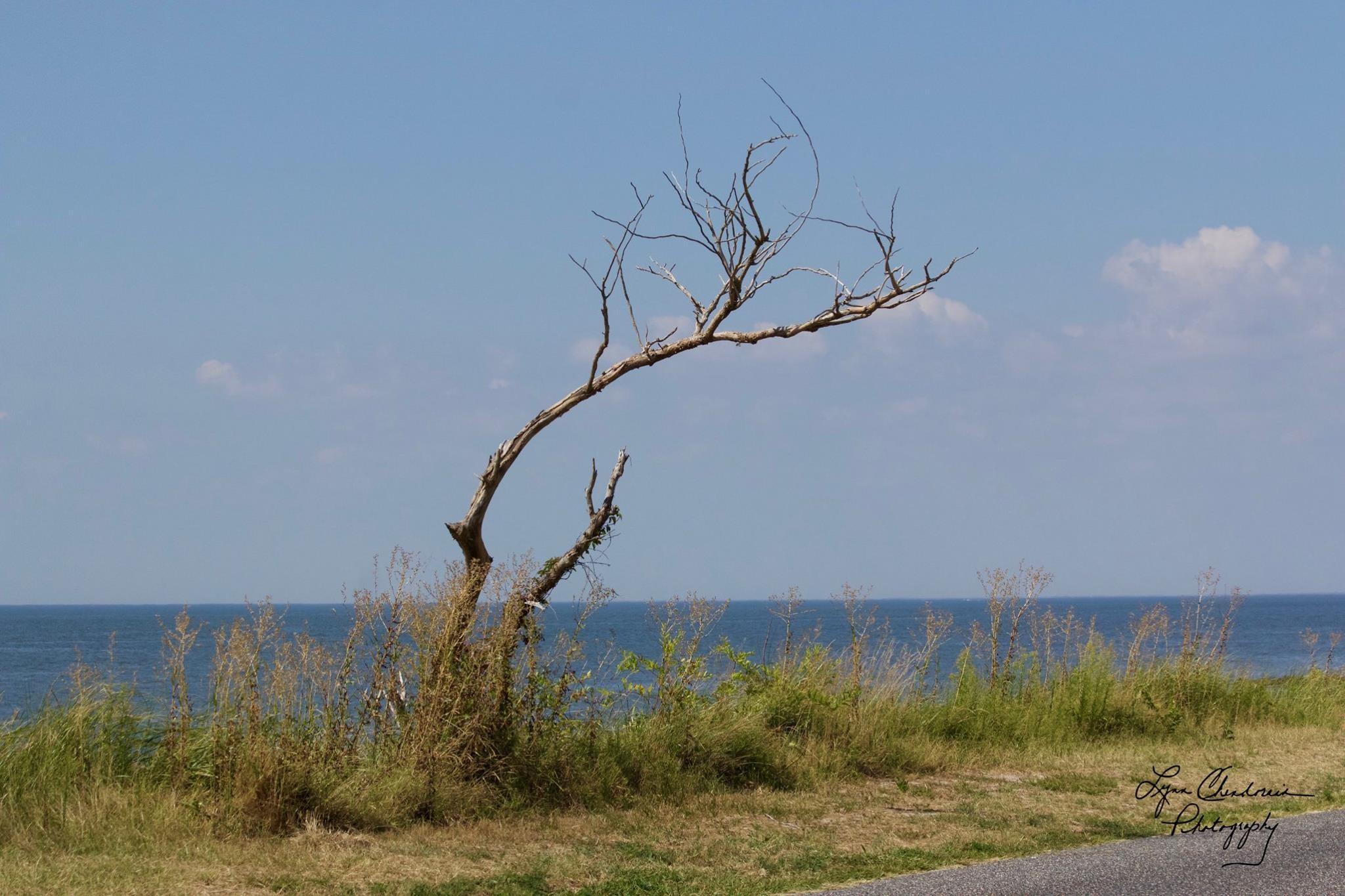 The Tree at the Bay by Lynn Chendorain