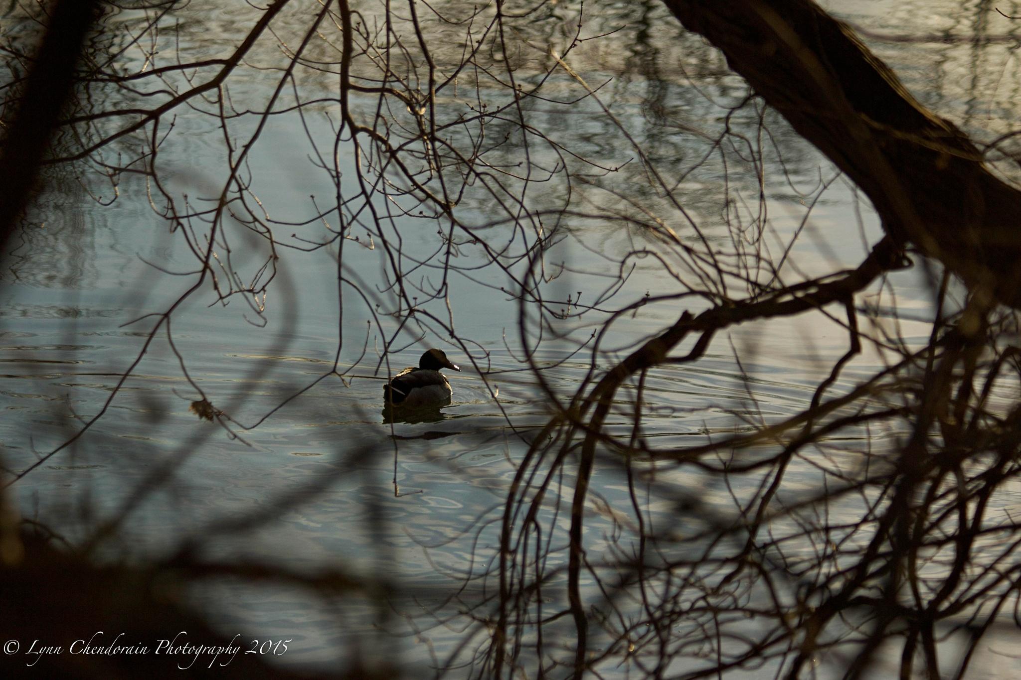 On the River by Lynn Chendorain