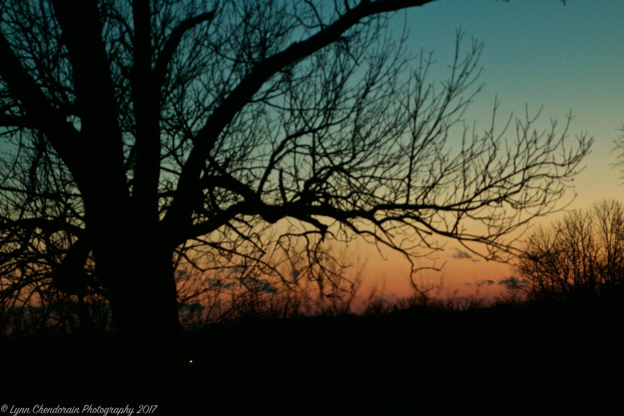 Tree Silhouette by Lynn Chendorain