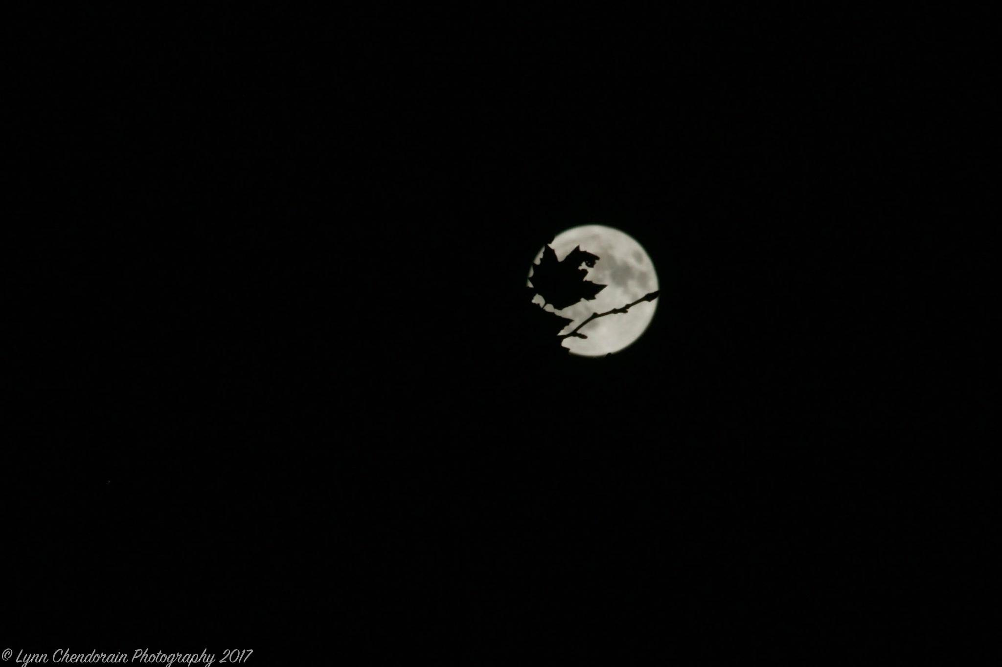 Darkest Night by Lynn Chendorain
