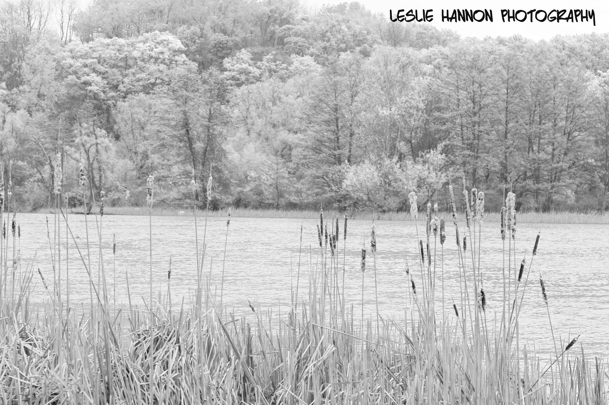 Cat Tails by lelhannon