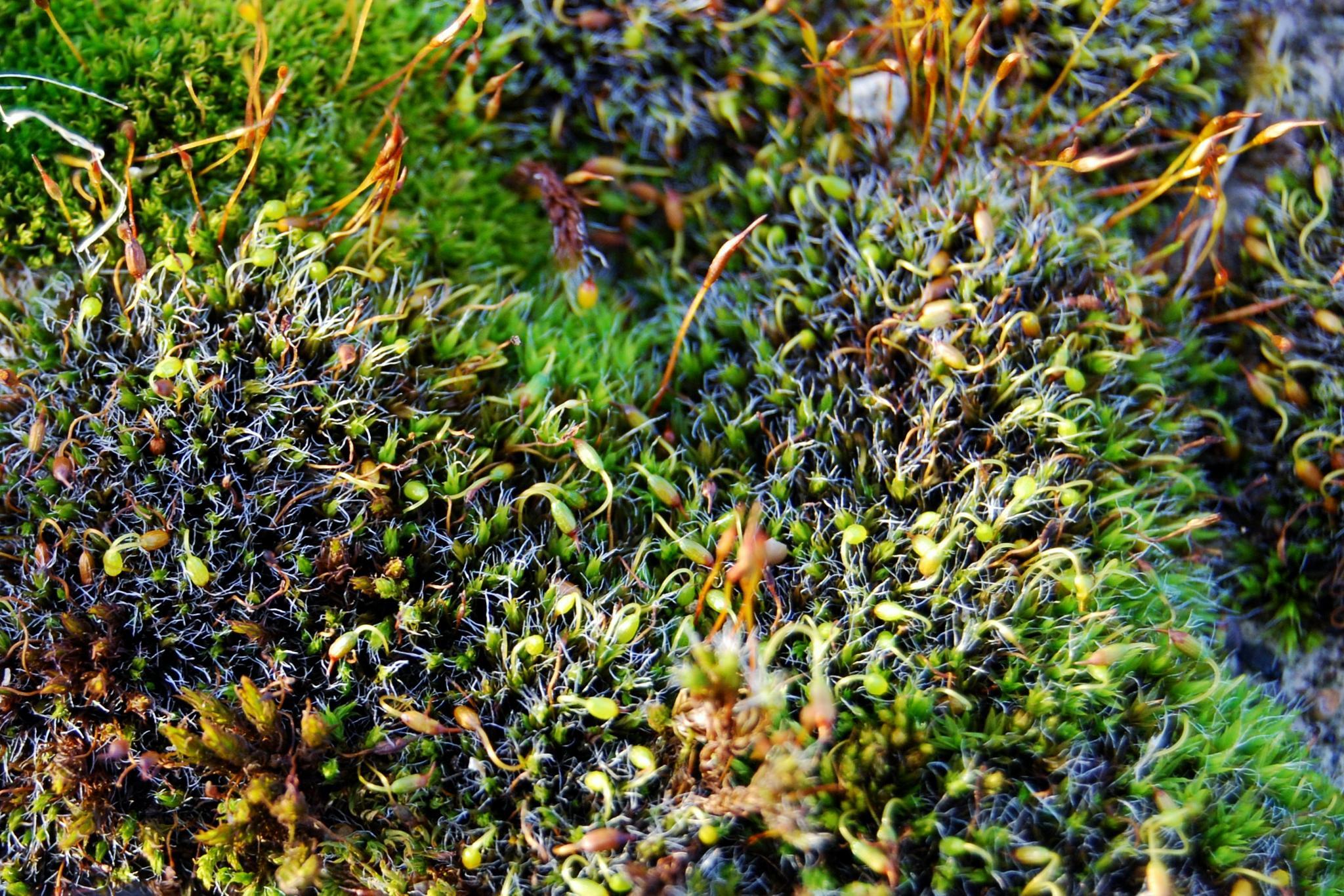 moss by tawnye.richards