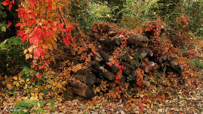 Colours of autumn by Pilinger Miklós Csaba