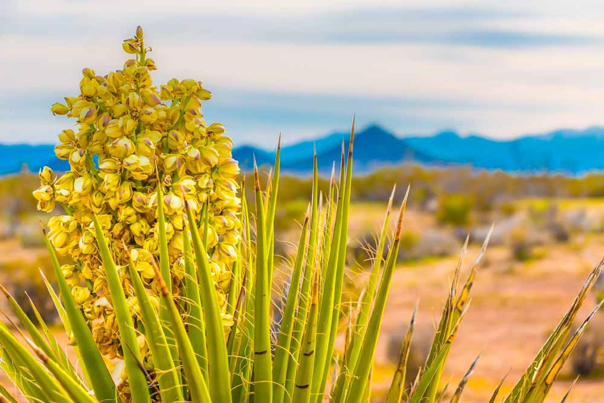 Yucca by Petminder