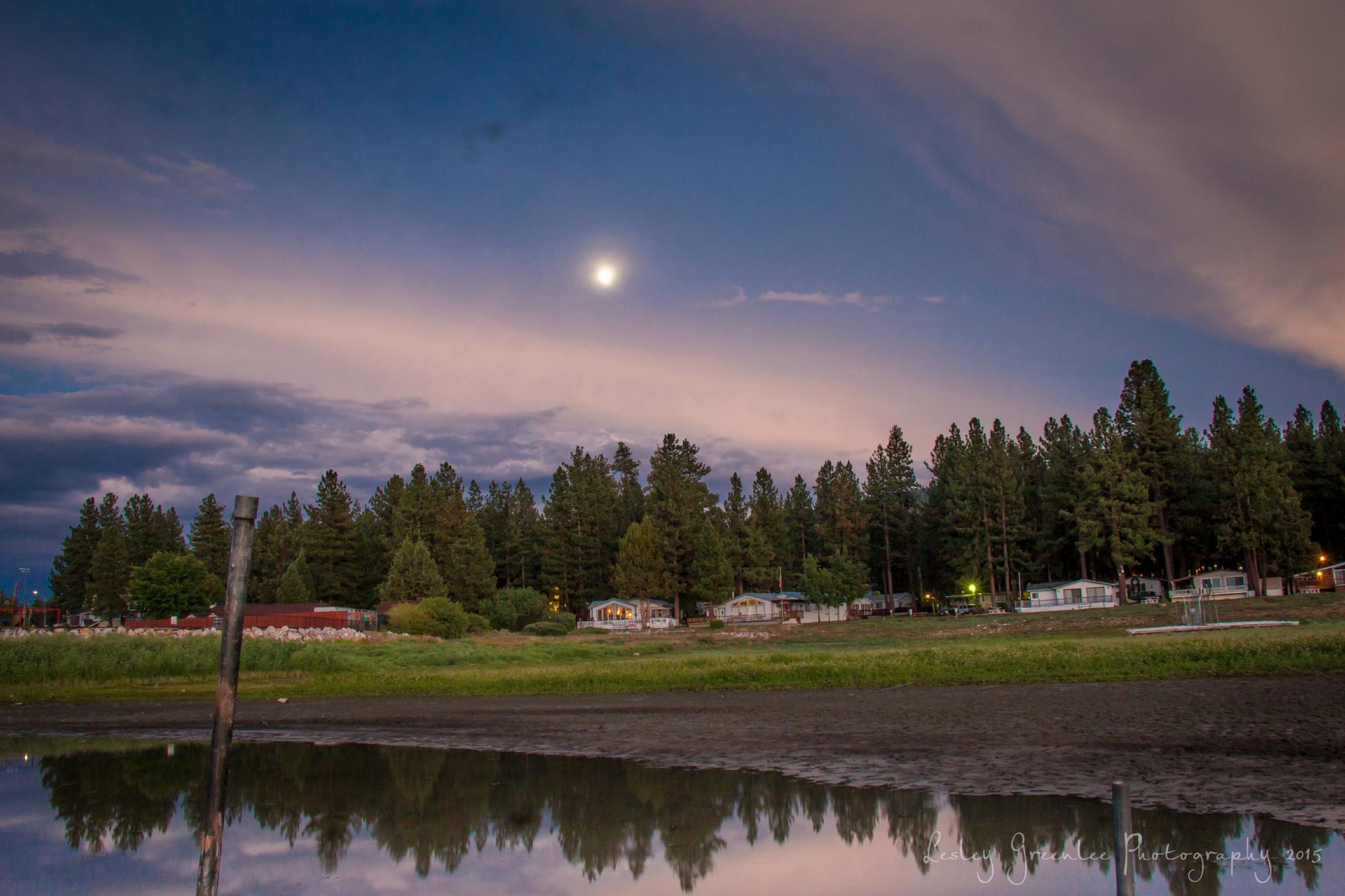 Moon Arising by Petminder