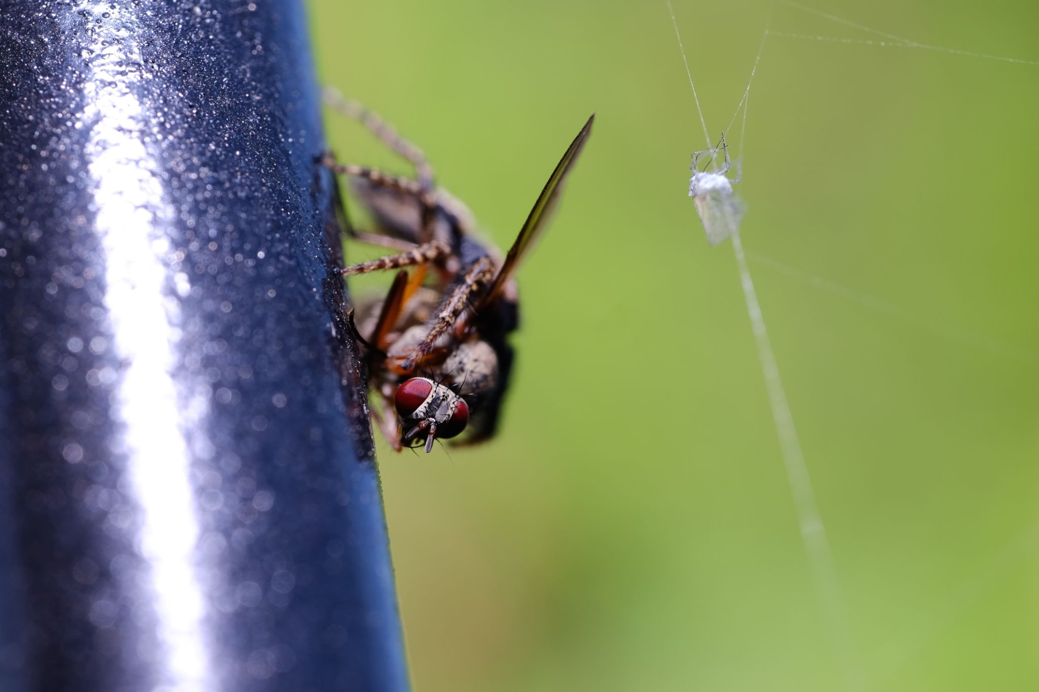 When the spyder caught the fly by stockografie