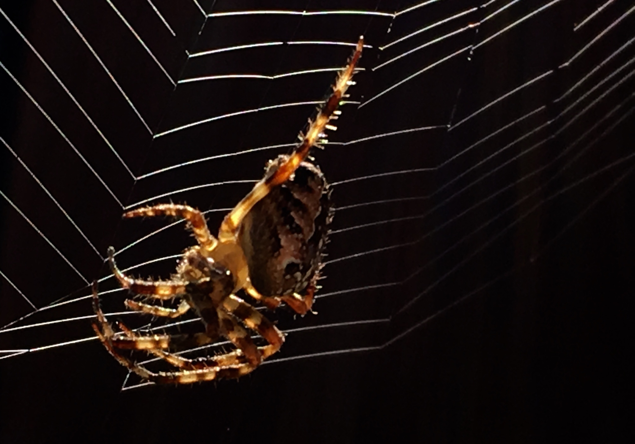 Along came a spider by Beth Holly Photography