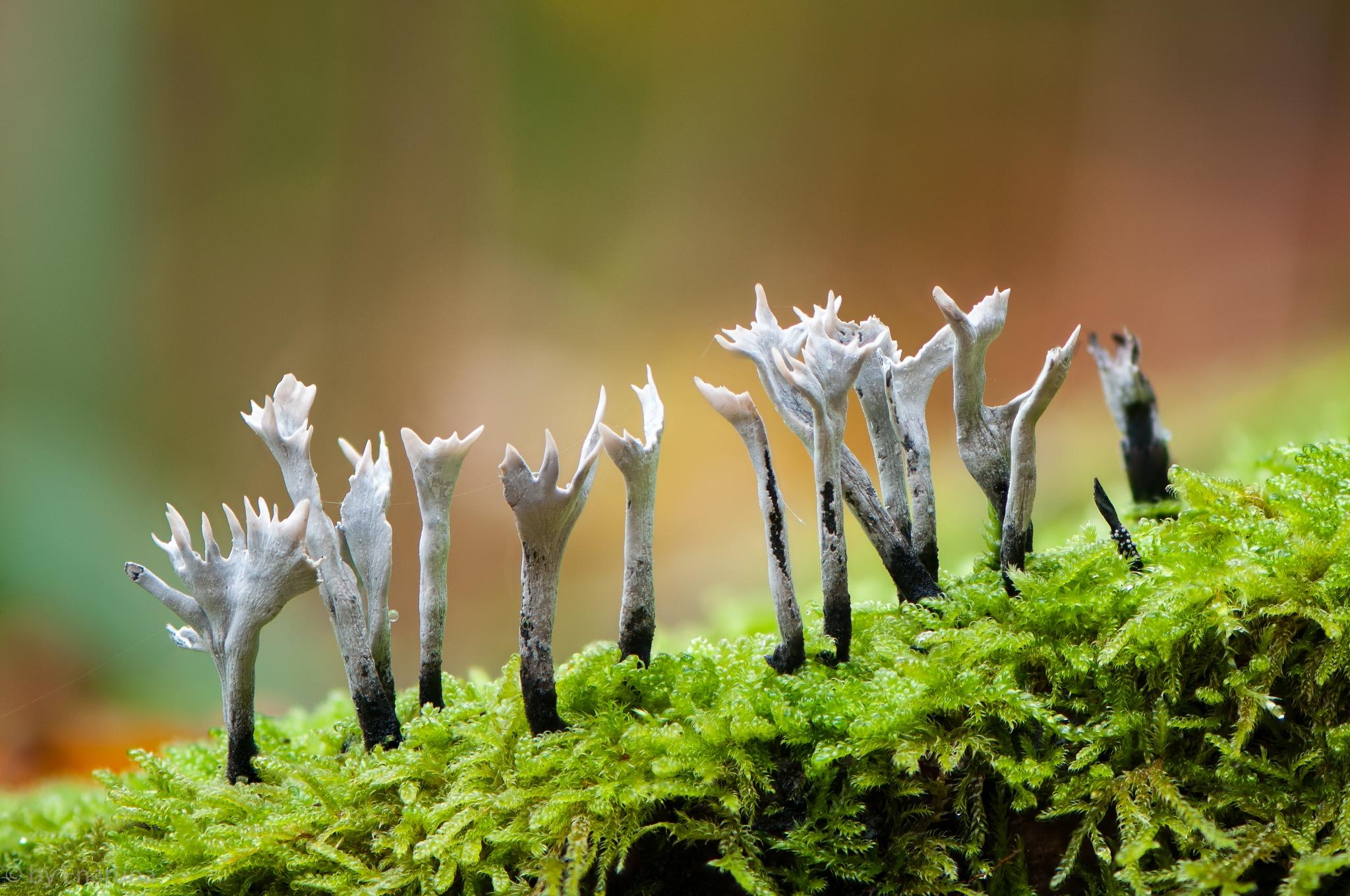 Strange Fungi by Enaruna