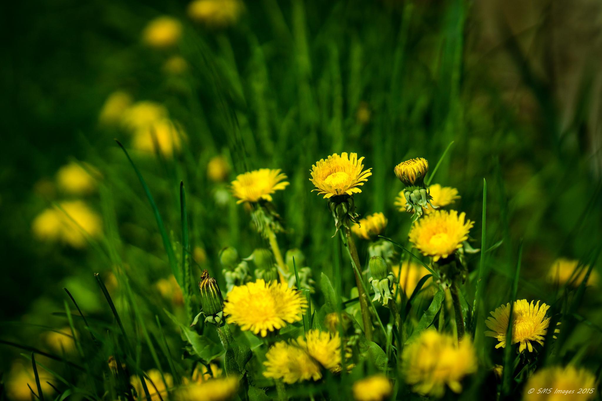 Advance of the Yellow Brigade by SteveMumert