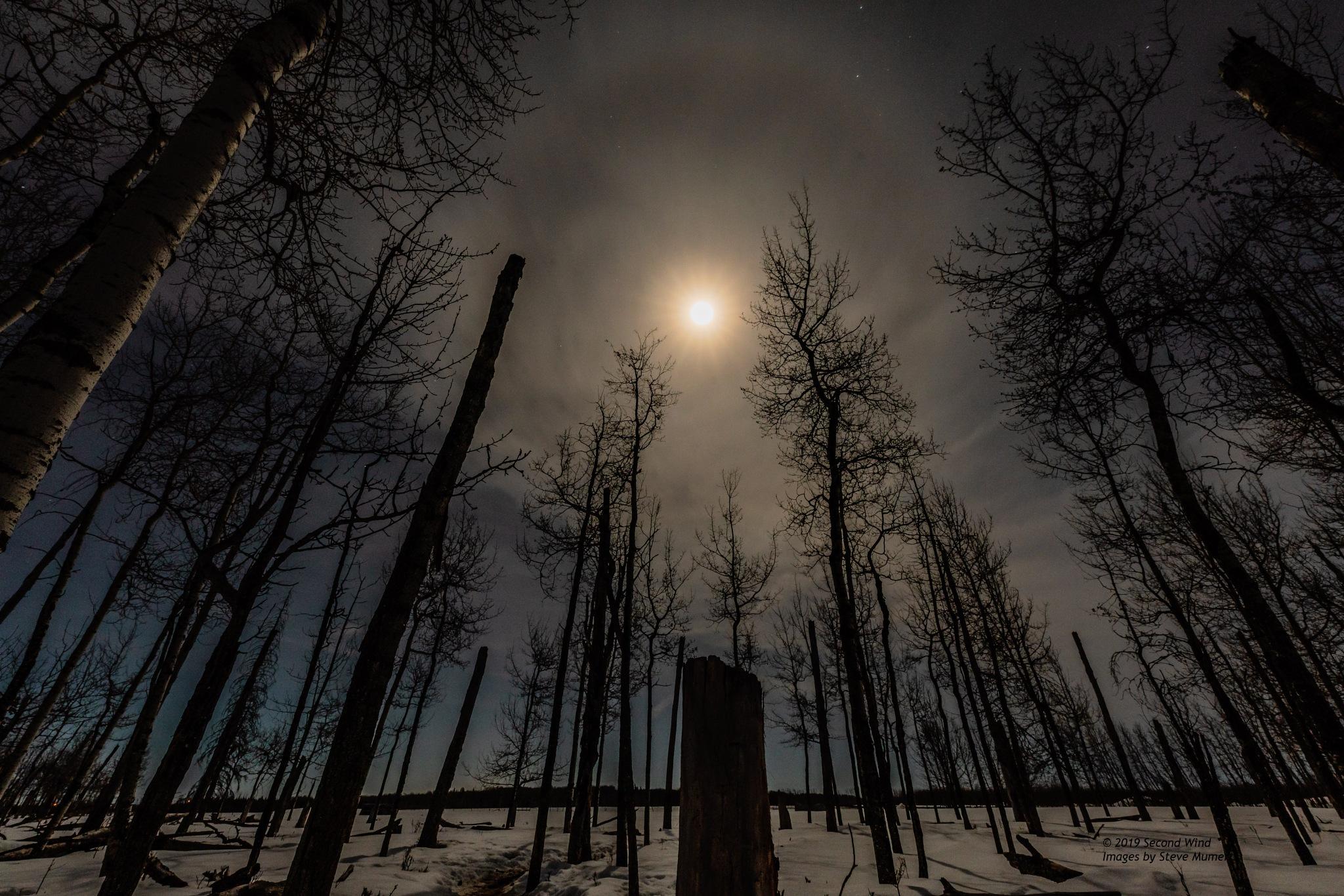 Stopping By Woods by SteveMumert